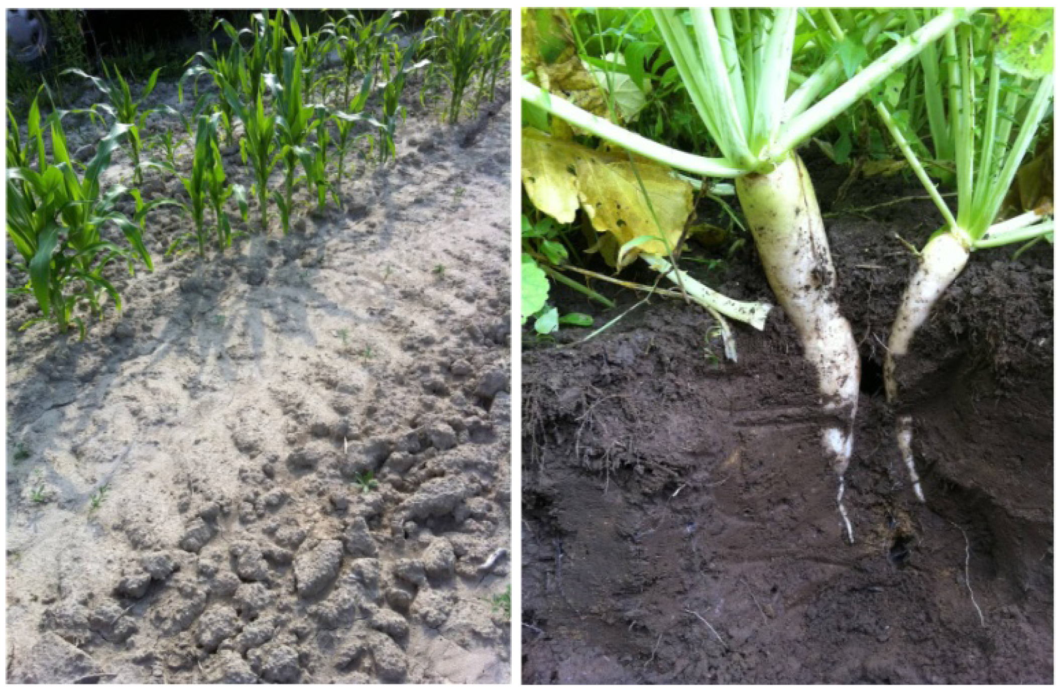 Agriculture free full text casting a wider net for Soil articles