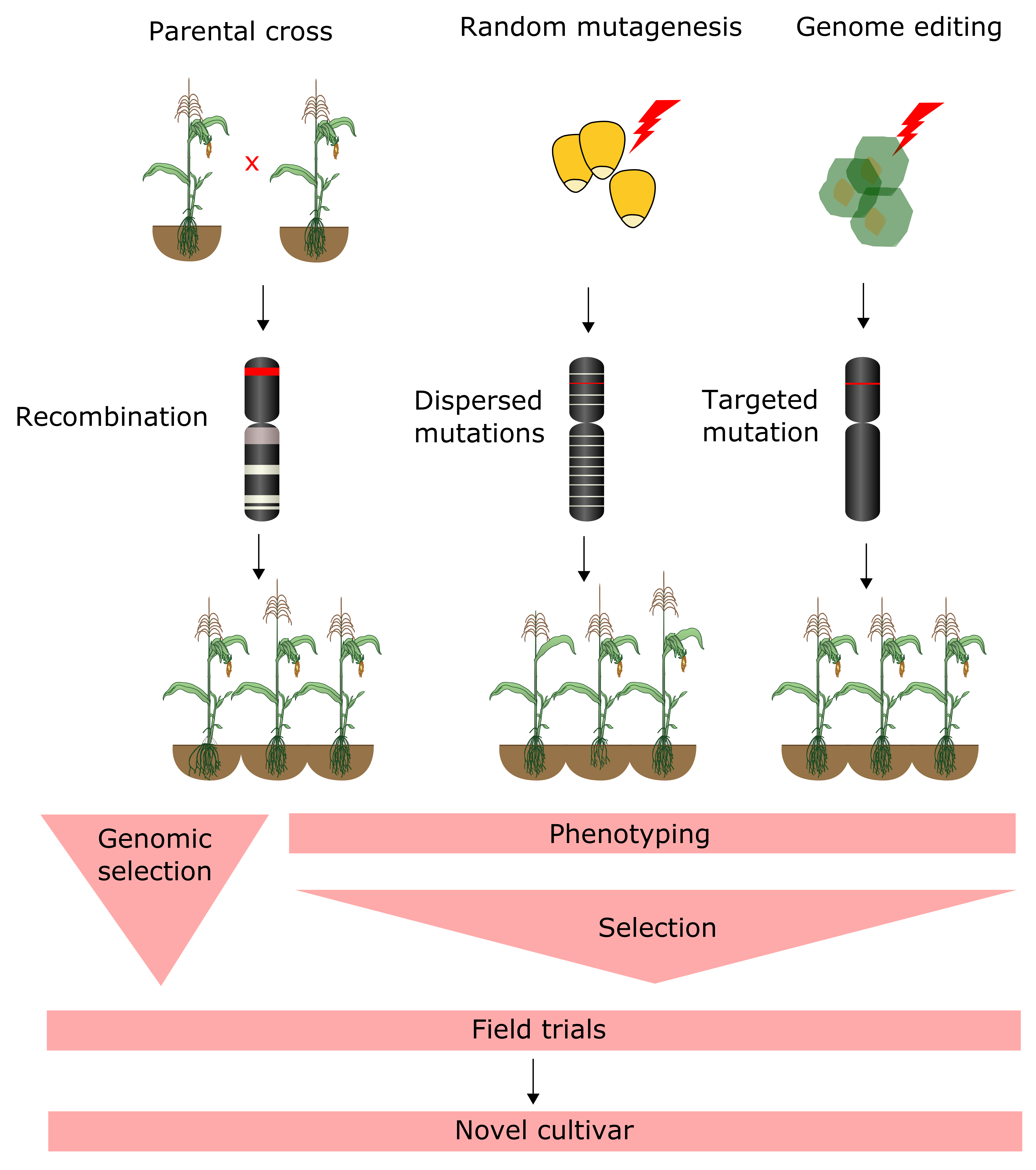 Agriculture | Free Full-Text | Advances in Integrating