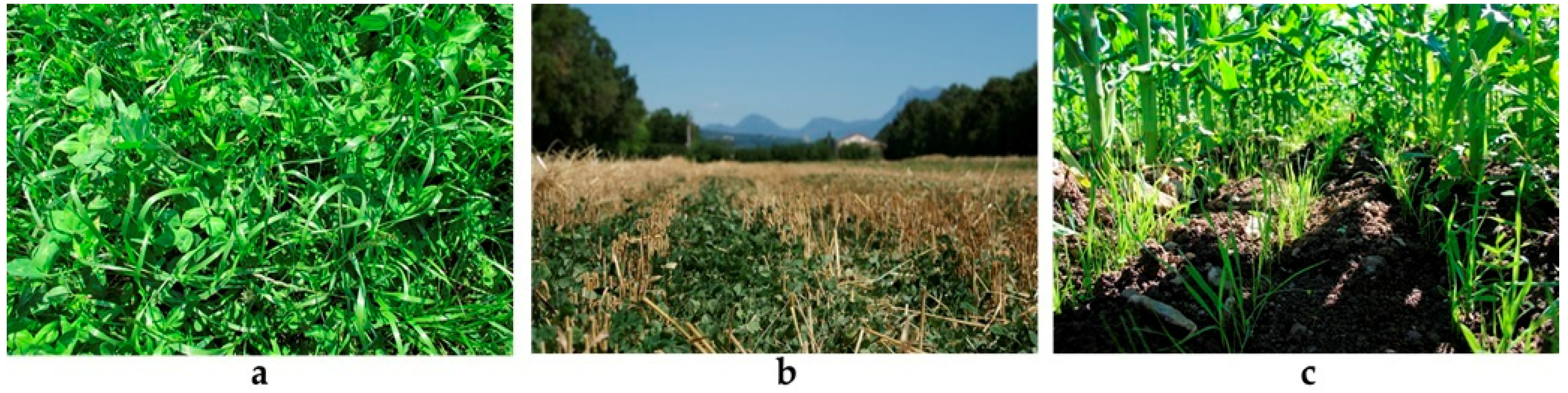 Genes in the Field On-Farm Conservation of Crop Diversity