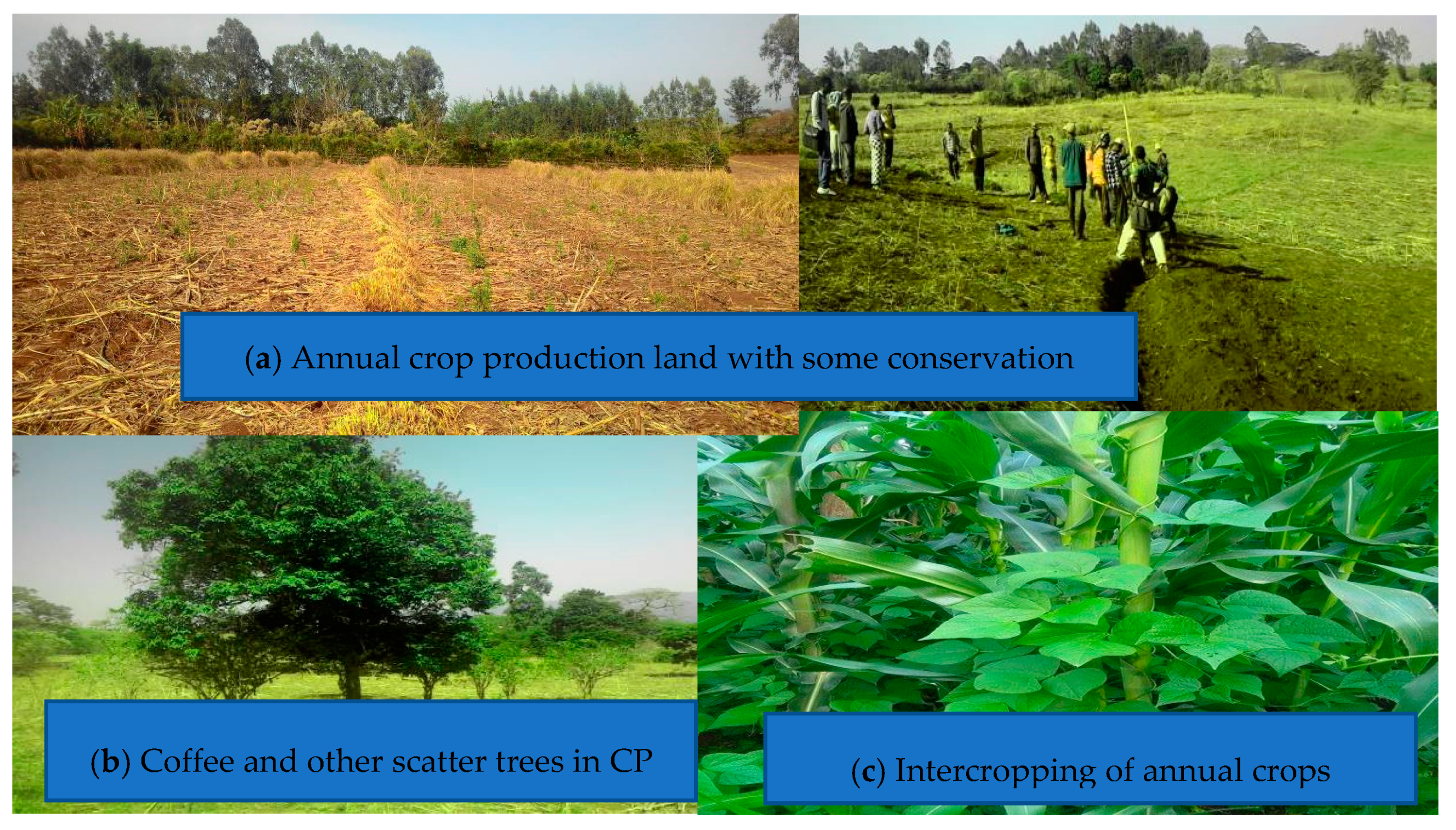 Agriculture | Free Full-Text | Agricultural Biodiversity and