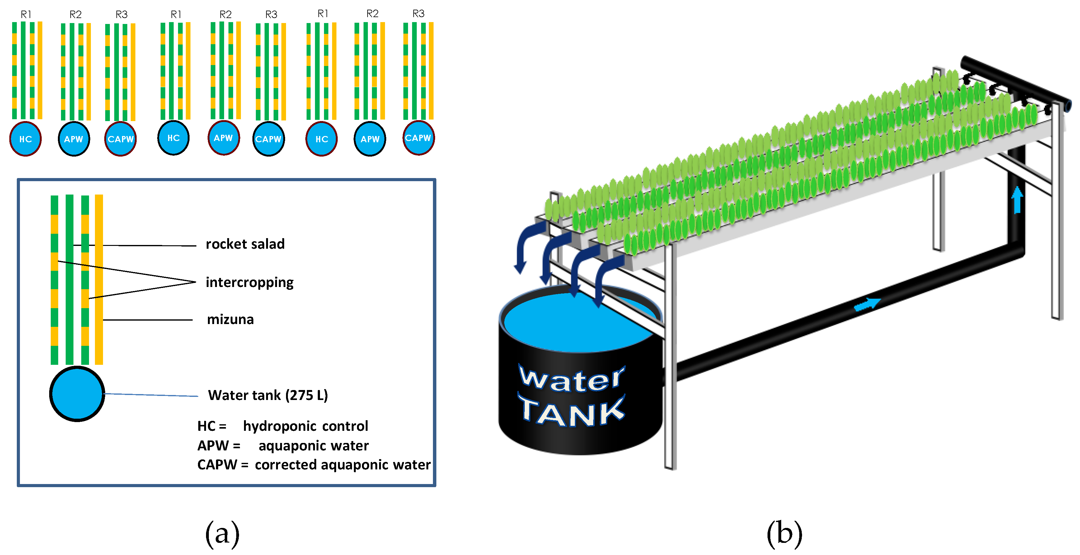 Agronomy   Free Full-Text   Extension of Aquaponic Water Use