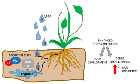 Agronomy   Special Issue : Toward a Sustainable Agriculture