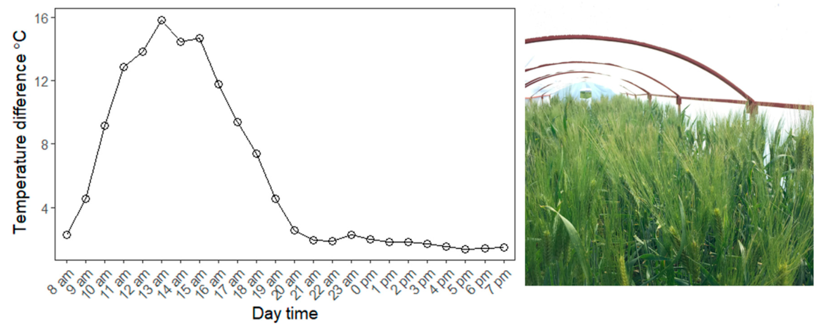 Agronomy | Free Full-Text | Loci Controlling Adaptation to Heat