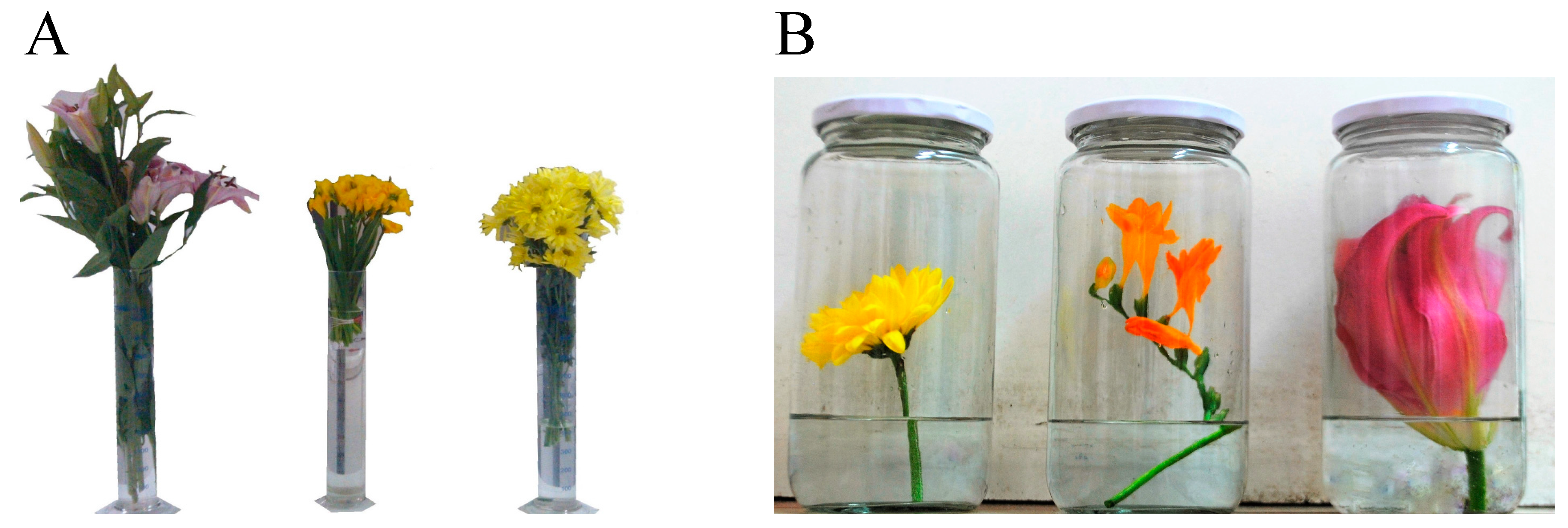 Agronomy Free Full Text Floral Scent Evaluation Of Three Cut Flowers Through Sensorial And Gas Chromatography Analysis Html