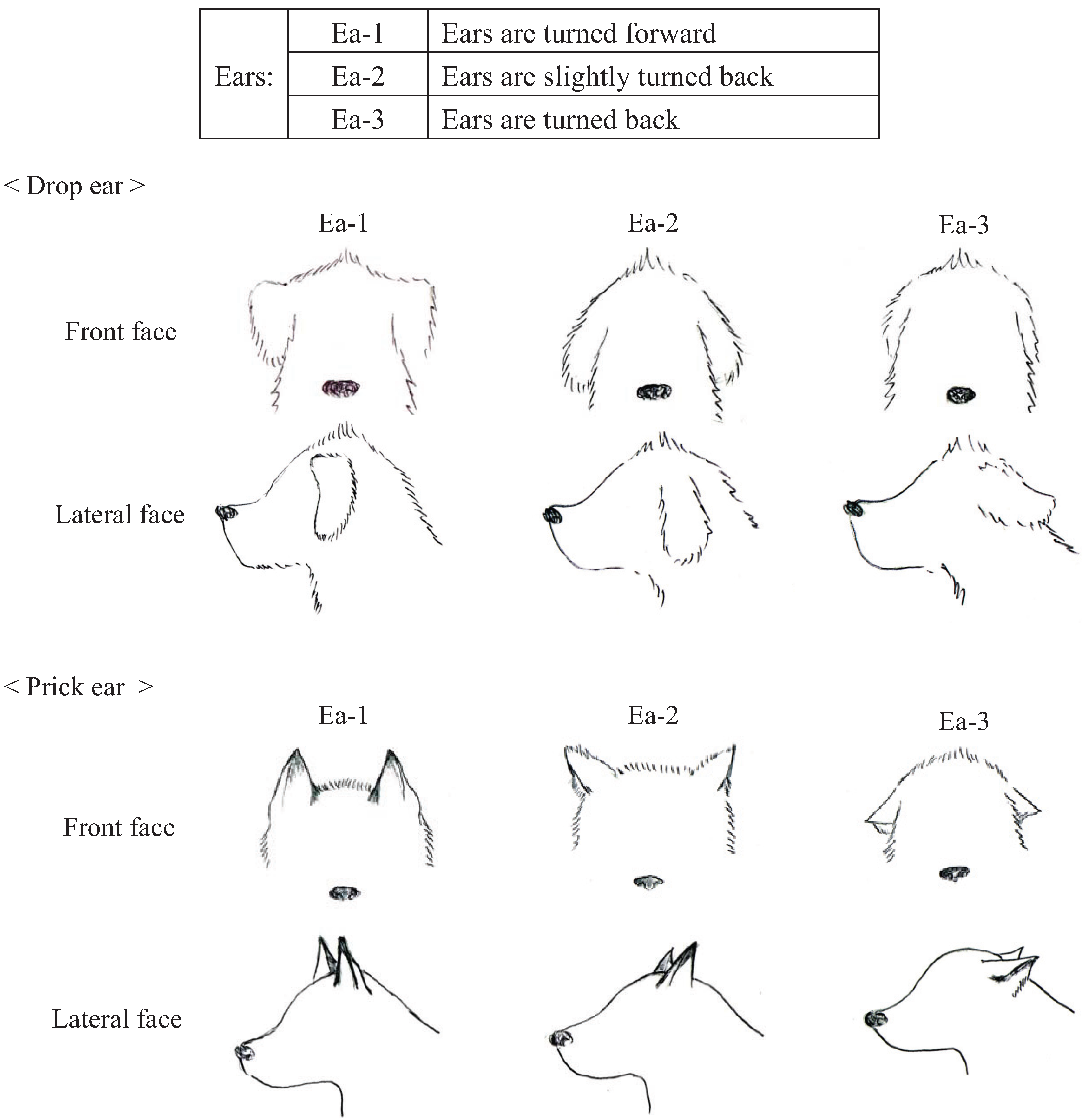 Animals Free Full Text Dogs Body Language Relevant To