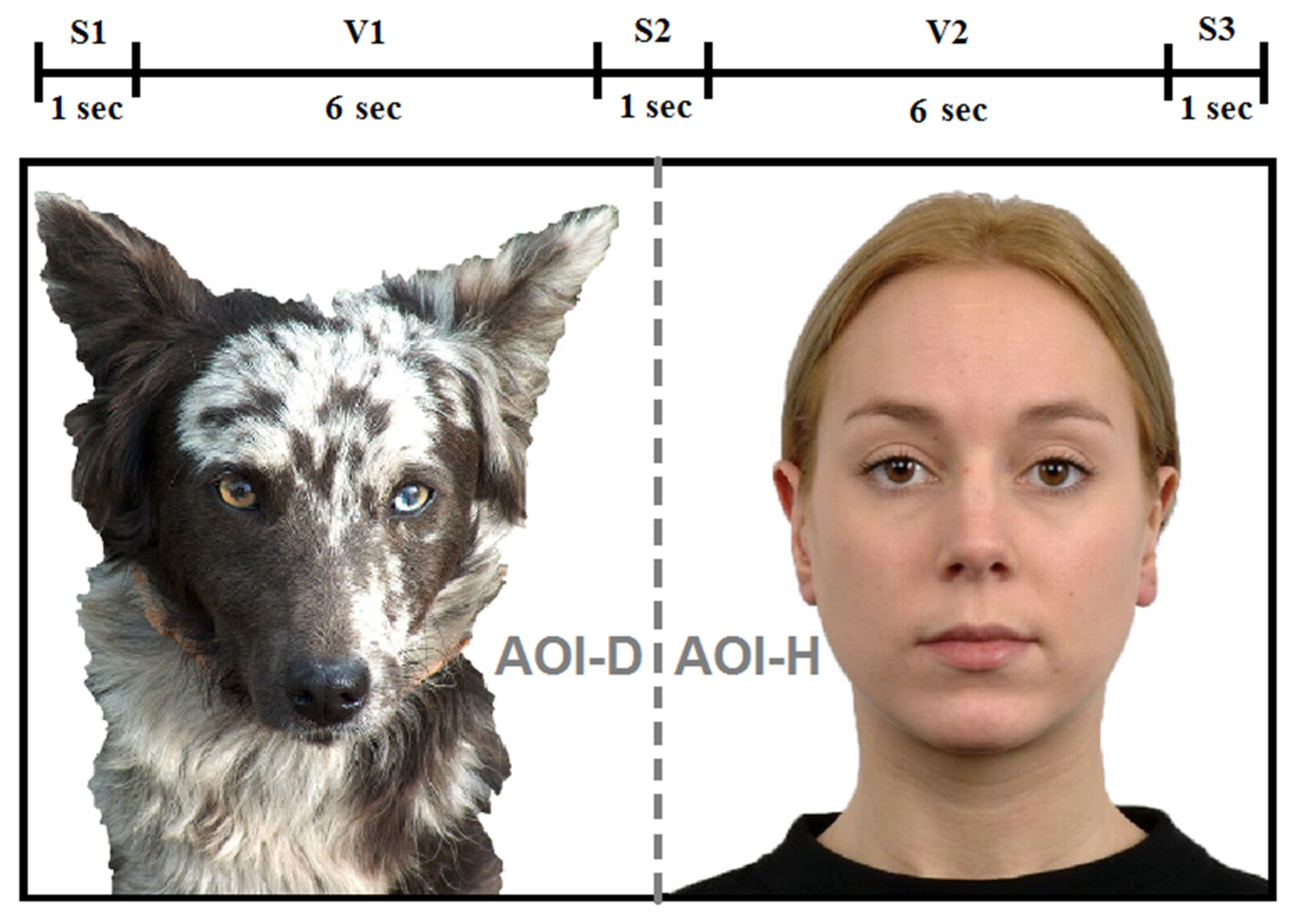 Animals | Free Full-Text | Auditory–Visual Matching of
