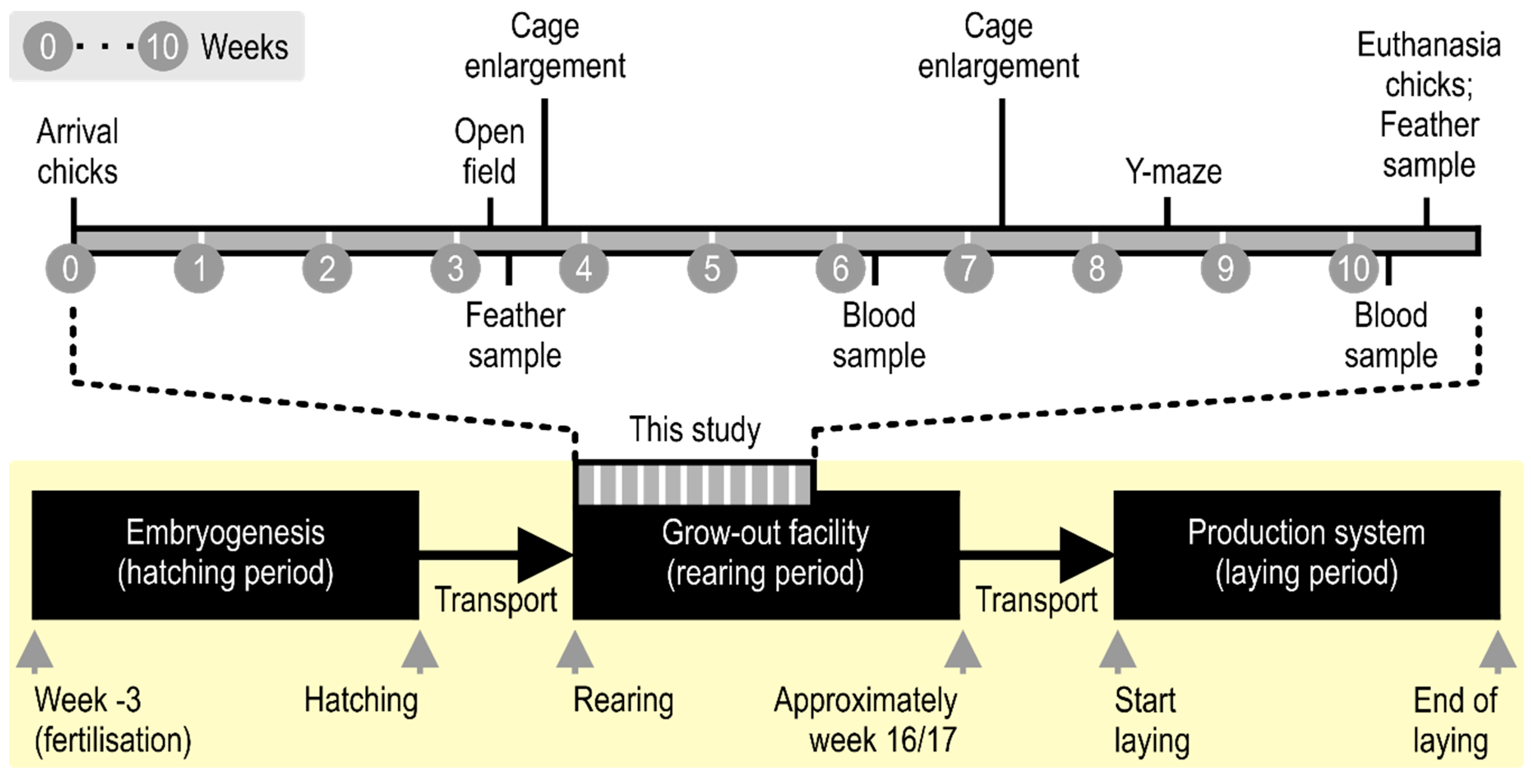 Animals | Free Full-Text | Stocking Density Affects Stress
