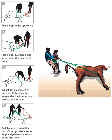 Animals | An Open Access Journal from MDPI