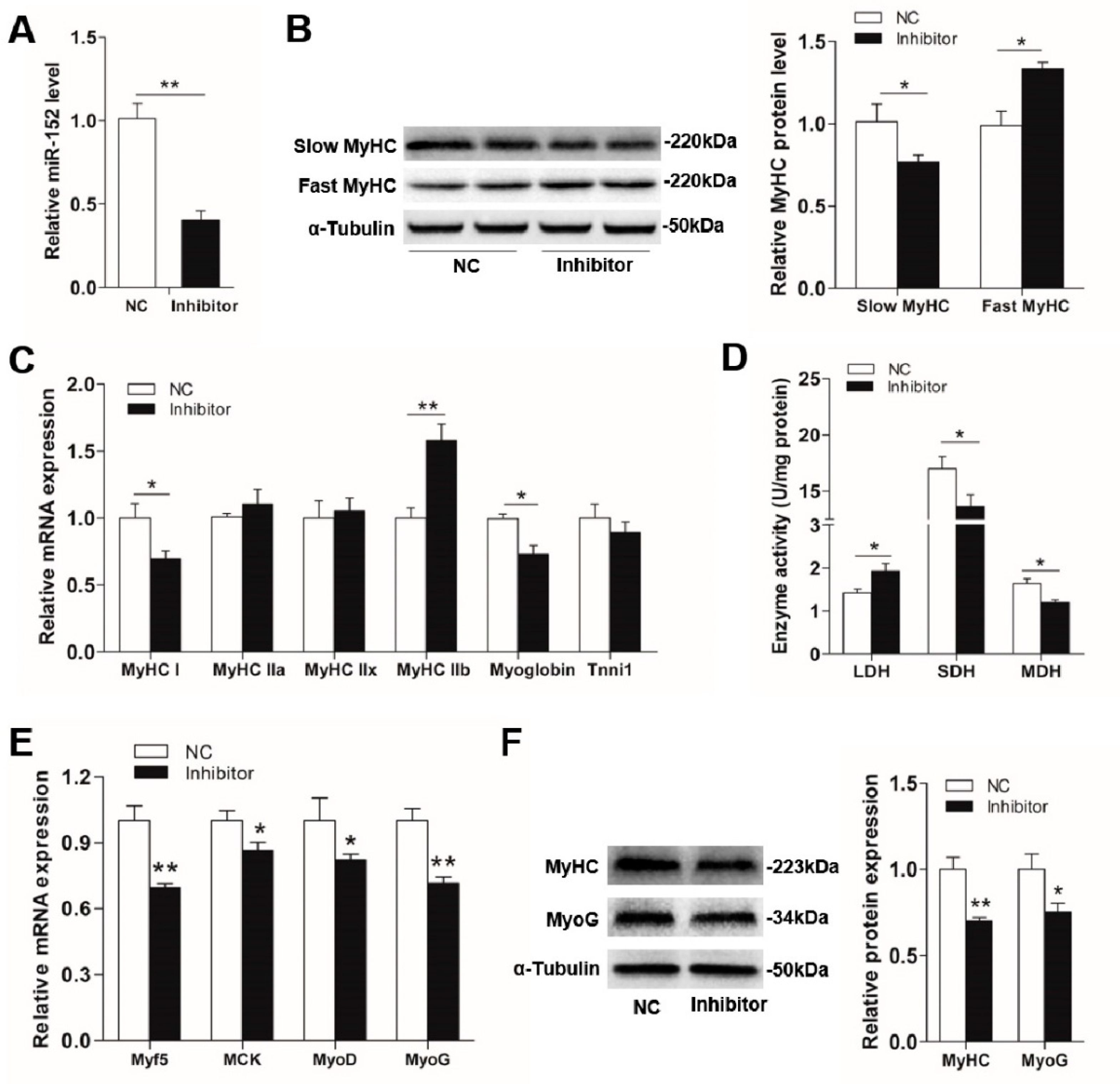 Animals   Free Full-Text   MicroRNA-152 Promotes Slow-Twitch