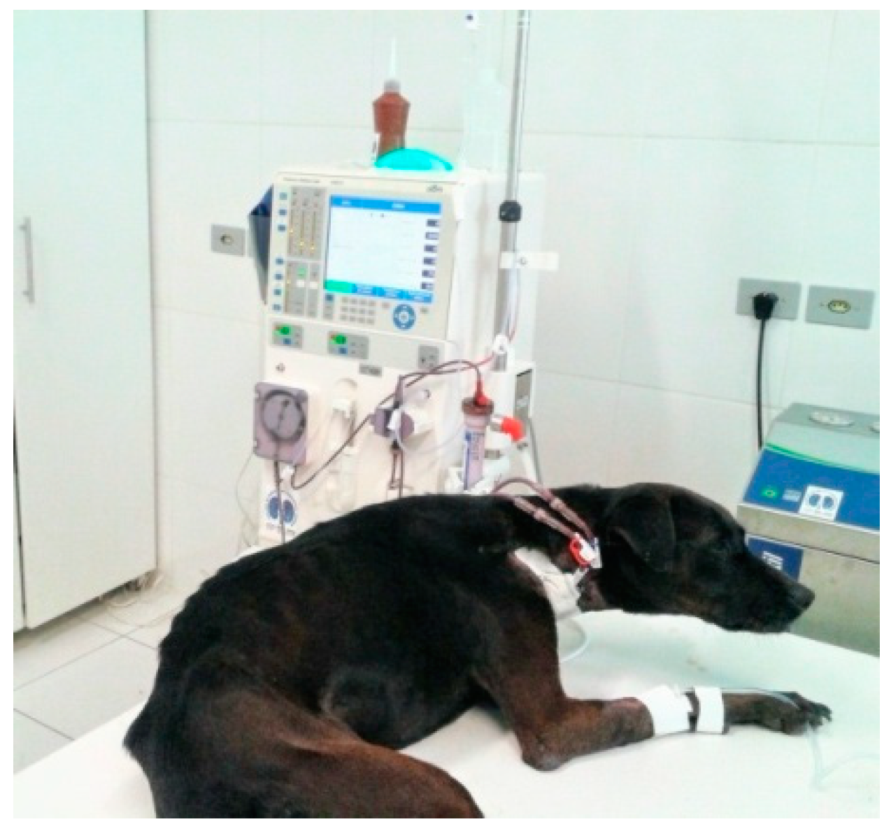 Animals Free Full Text Heart Rate Variability And Electrocardiographic Parameters Predictive Of Arrhythmias In Dogs With Stage Iv Chronic Kidney Disease Undergoing Intermittent Haemodialysis Html
