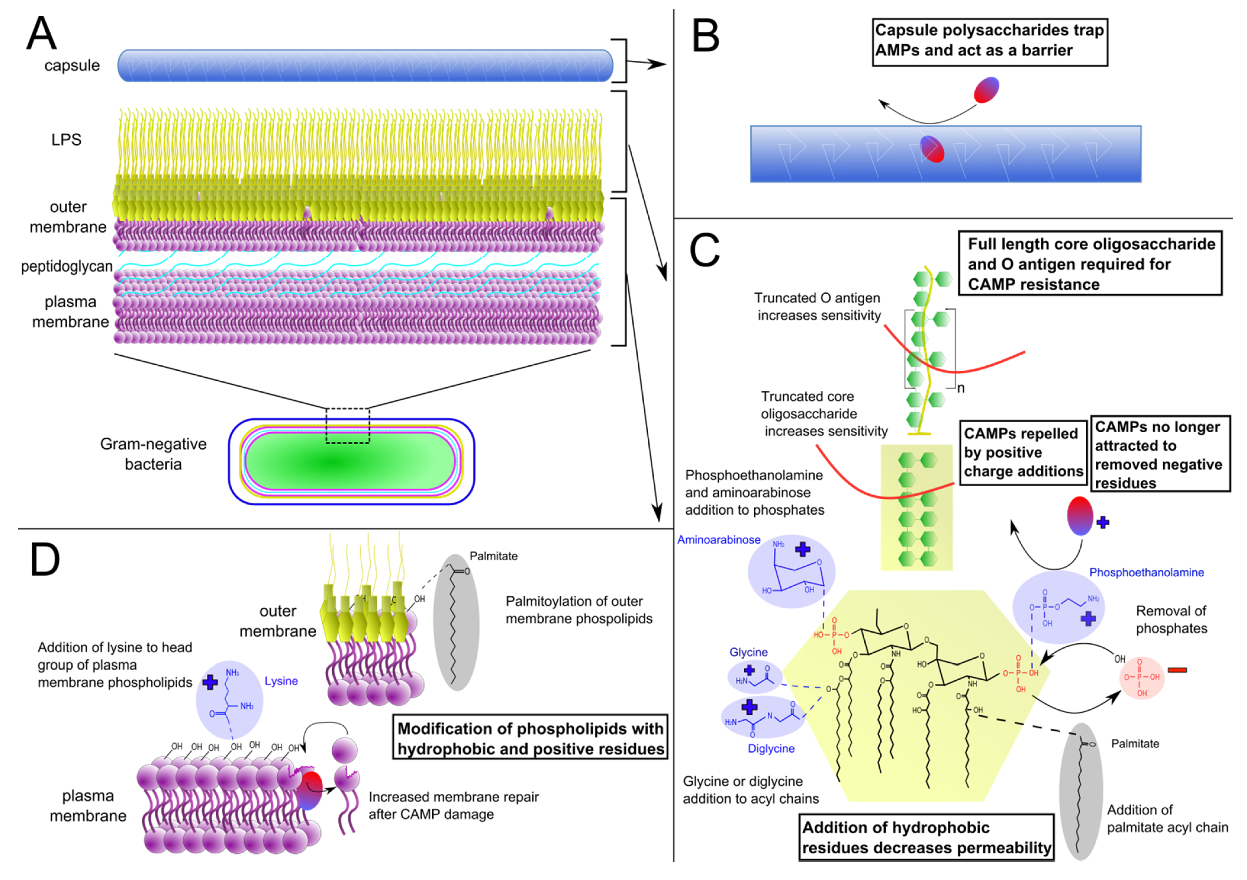 Antibiotics free full text mechanisms of antimicrobial peptide no ccuart Image collections