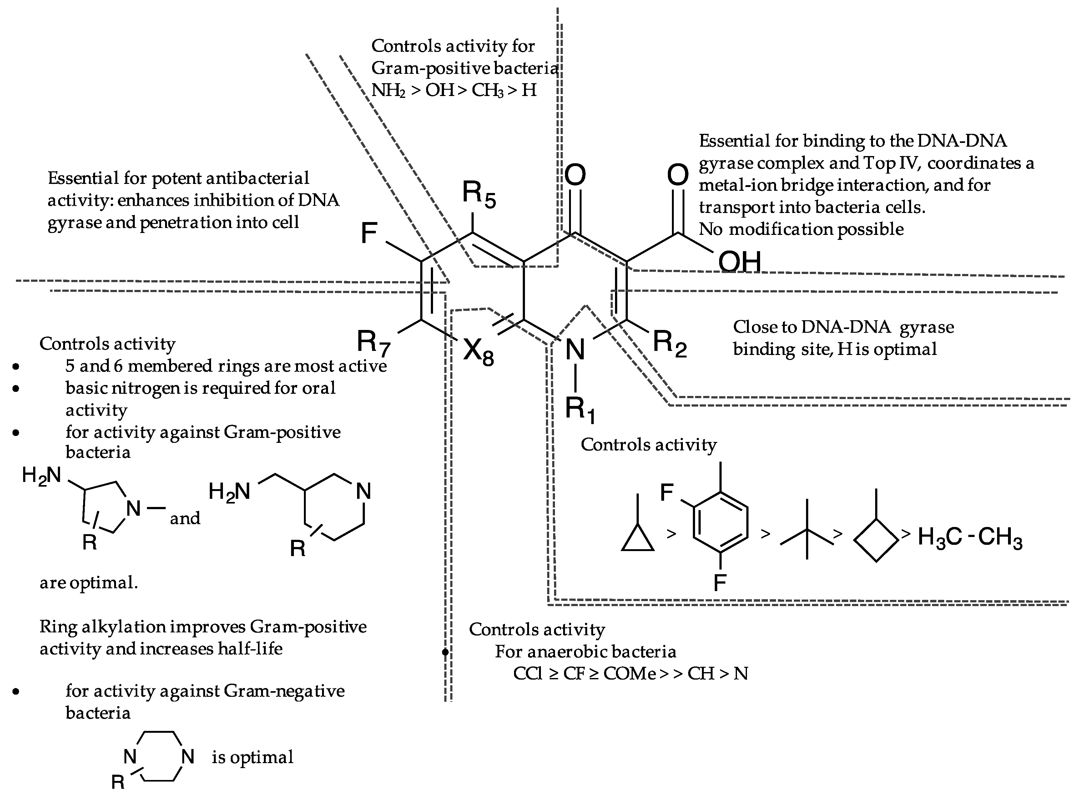 levetiracetam structure activity relationship for quinolones
