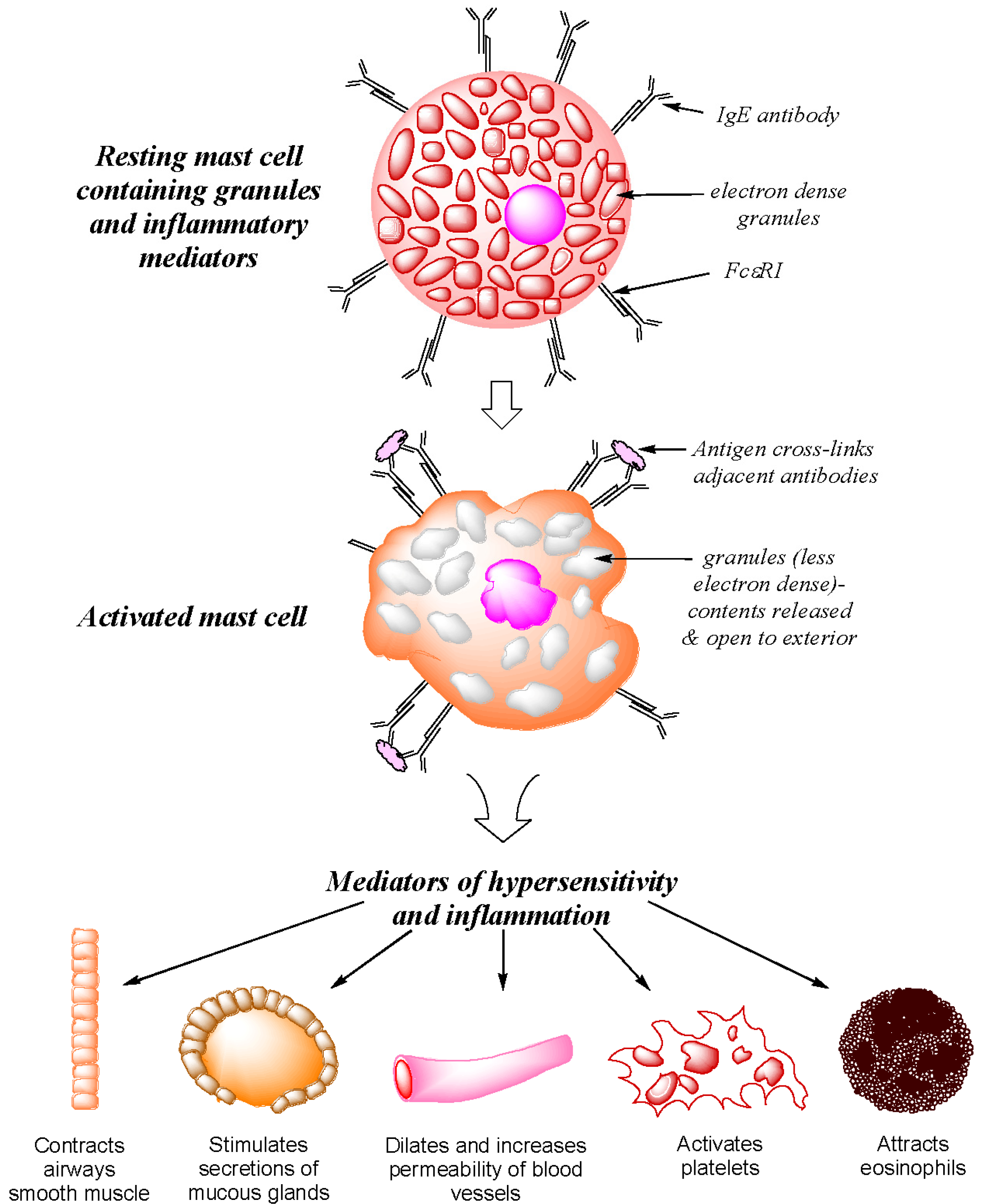 Antibodies | Free Full-Text | IgE and Drug Allergy: Antibody