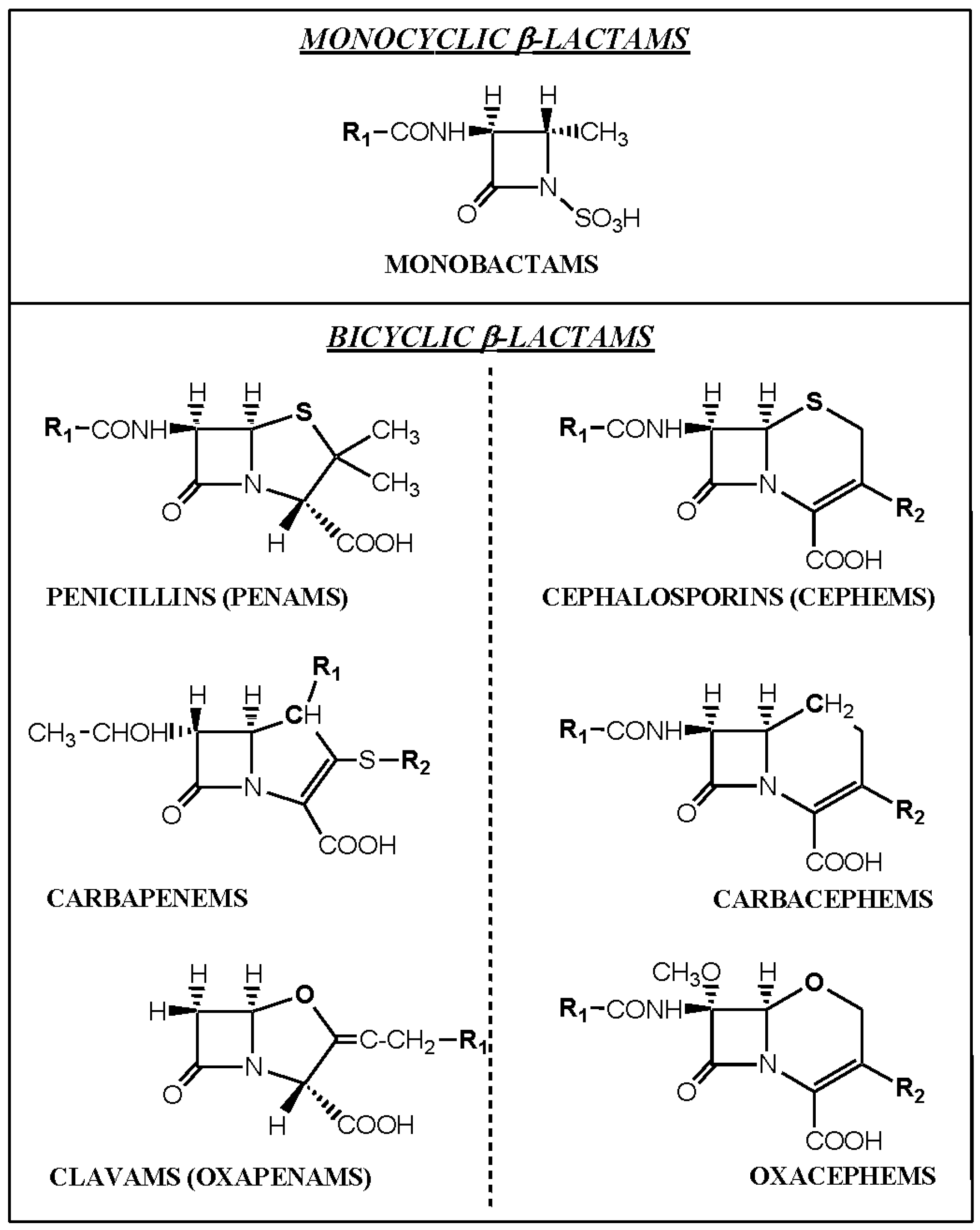 what comprises a penicillin structure Antibiotics, an international our study comprises consultations and antibiotic prescriptions for pnpase structure and function have been studied extensively.
