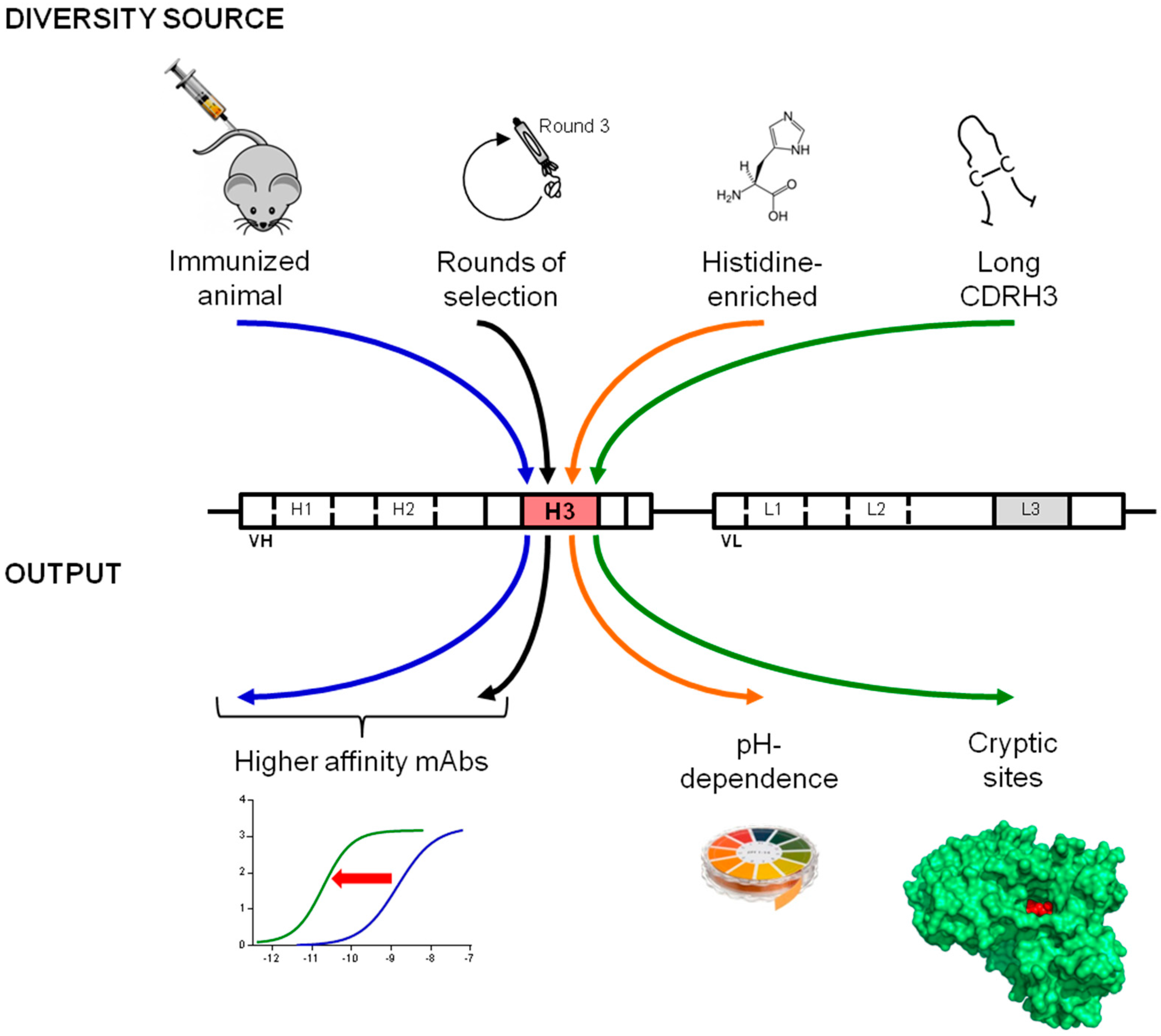 Introducing The Antibody: Purpose-Oriented Antibody