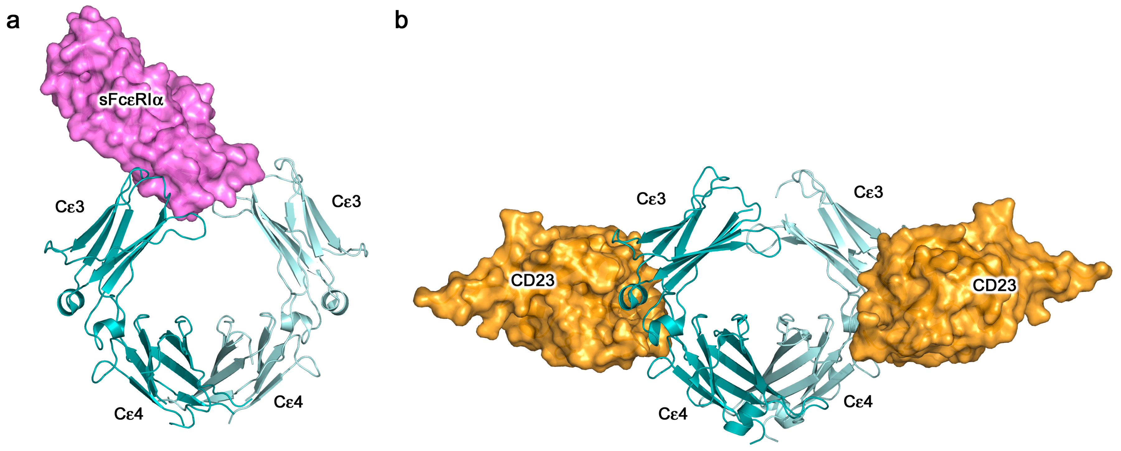 Antibodies   Free Full-Text   IgE Antibodies: From Structure