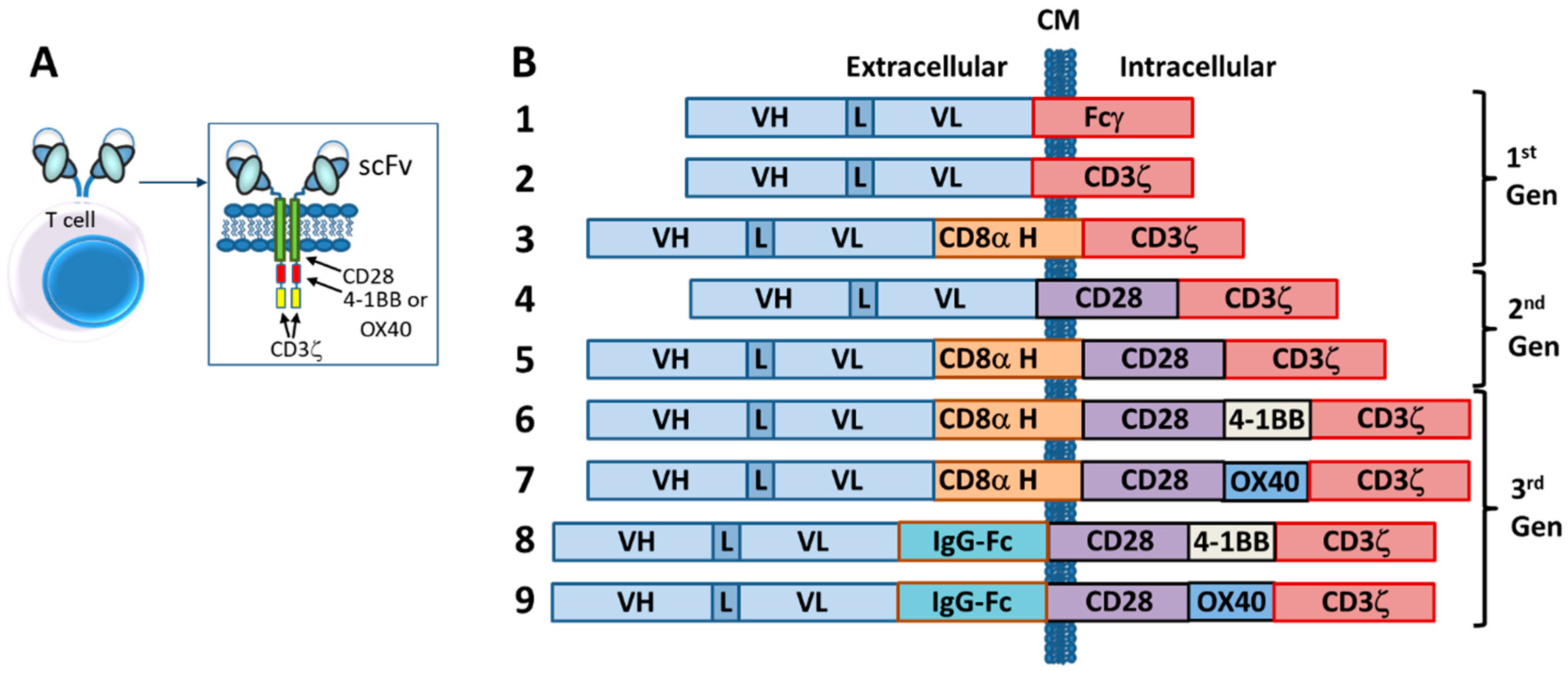 Antibodies | Free Full-Text | Bispecific T-Cell Redirection