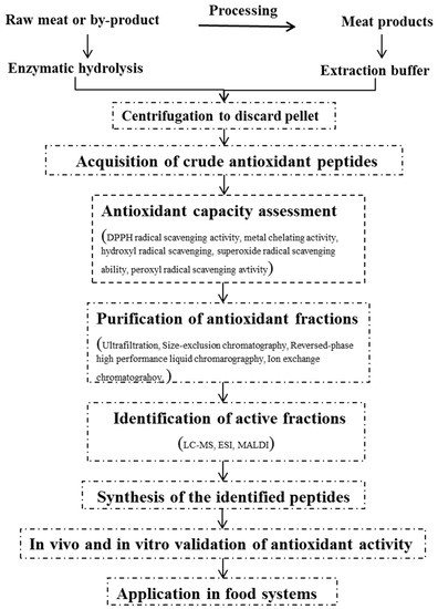 A Review of Antioxidant Peptides Derived from Meat Muscle and By-Products
