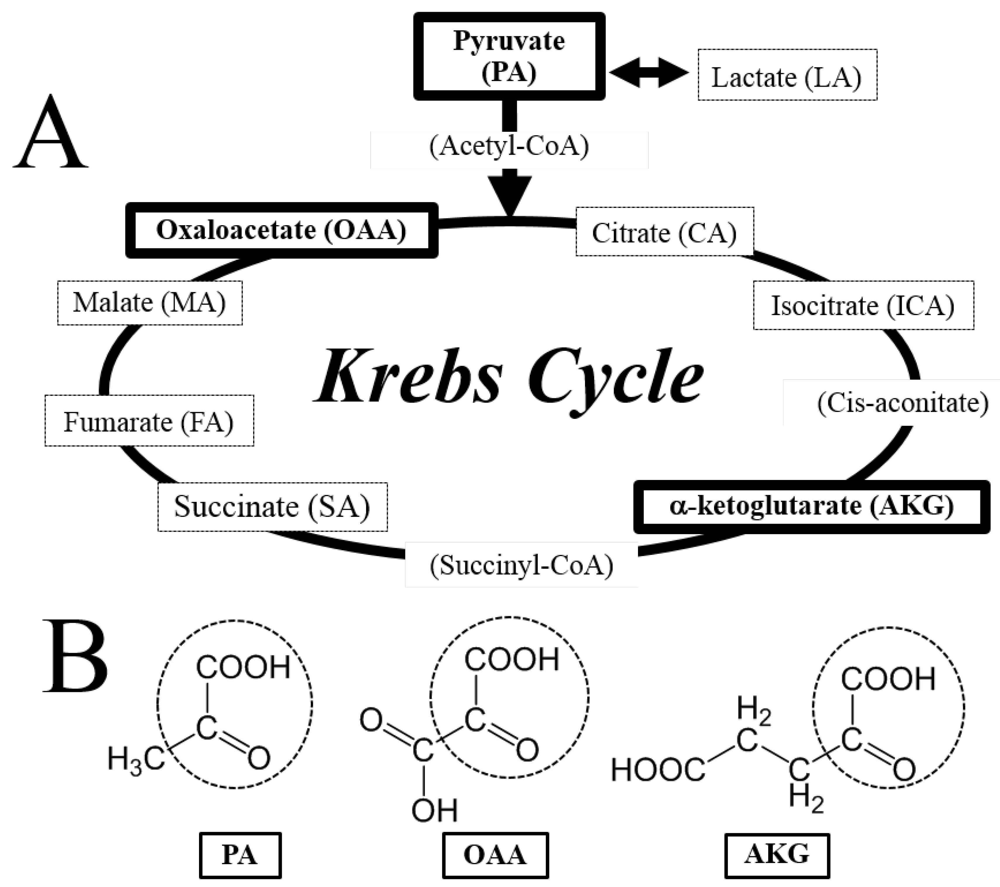 Antioxidants free full text krebs cycle intermediates no pooptronica Image collections