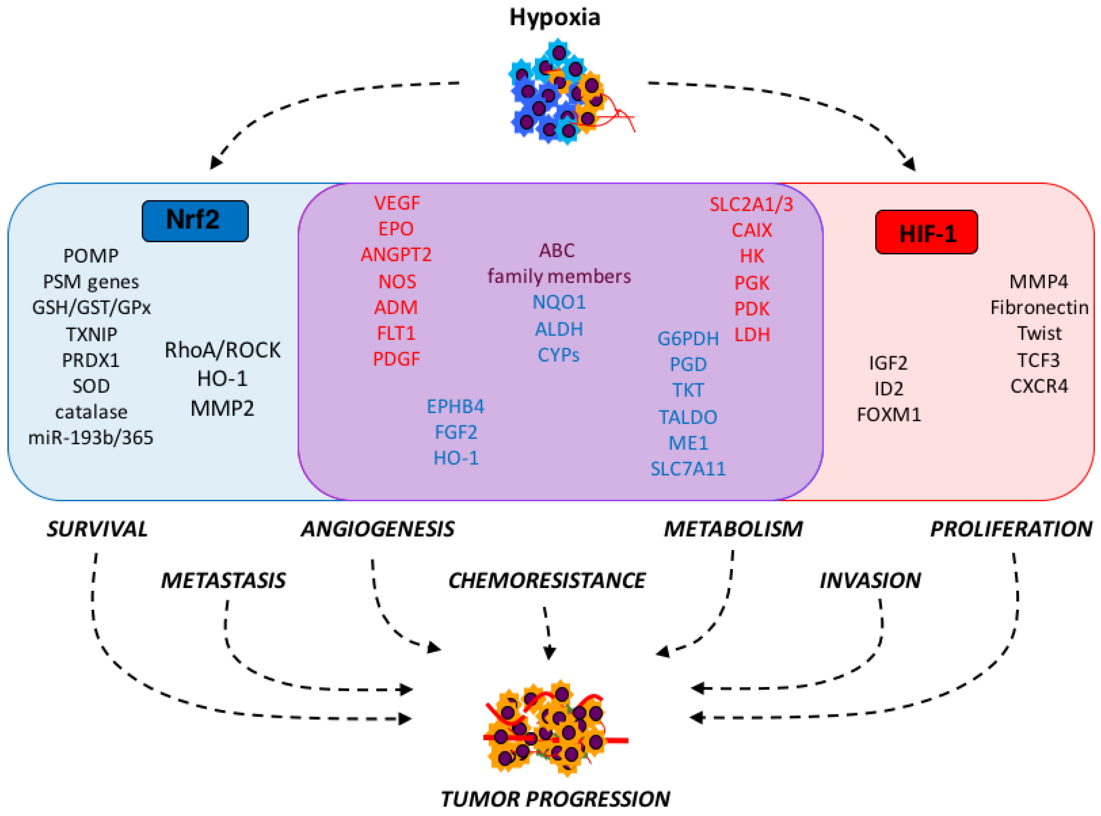 Pathway Pictures Antioxidants Free Full Text Strange Bedfellows