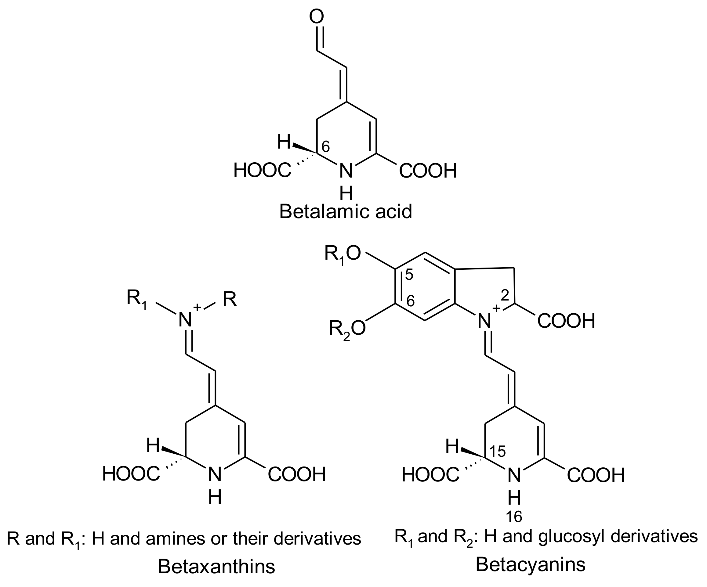 Antioxidants | Free Full-Text | Betalains in Some Species of