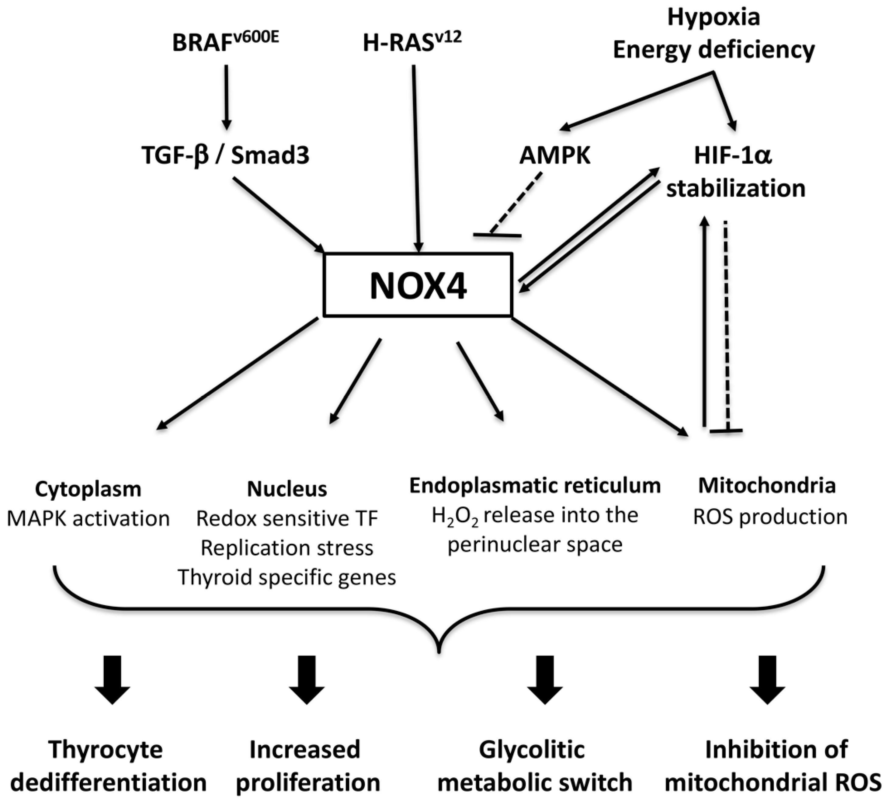 Antioxidants | Free Full-Text | H2O2 Metabolism in Normal