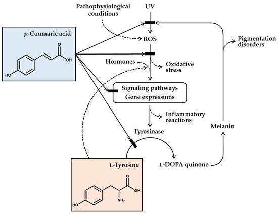 Antioxidants | An Open Access Journal from MDPI