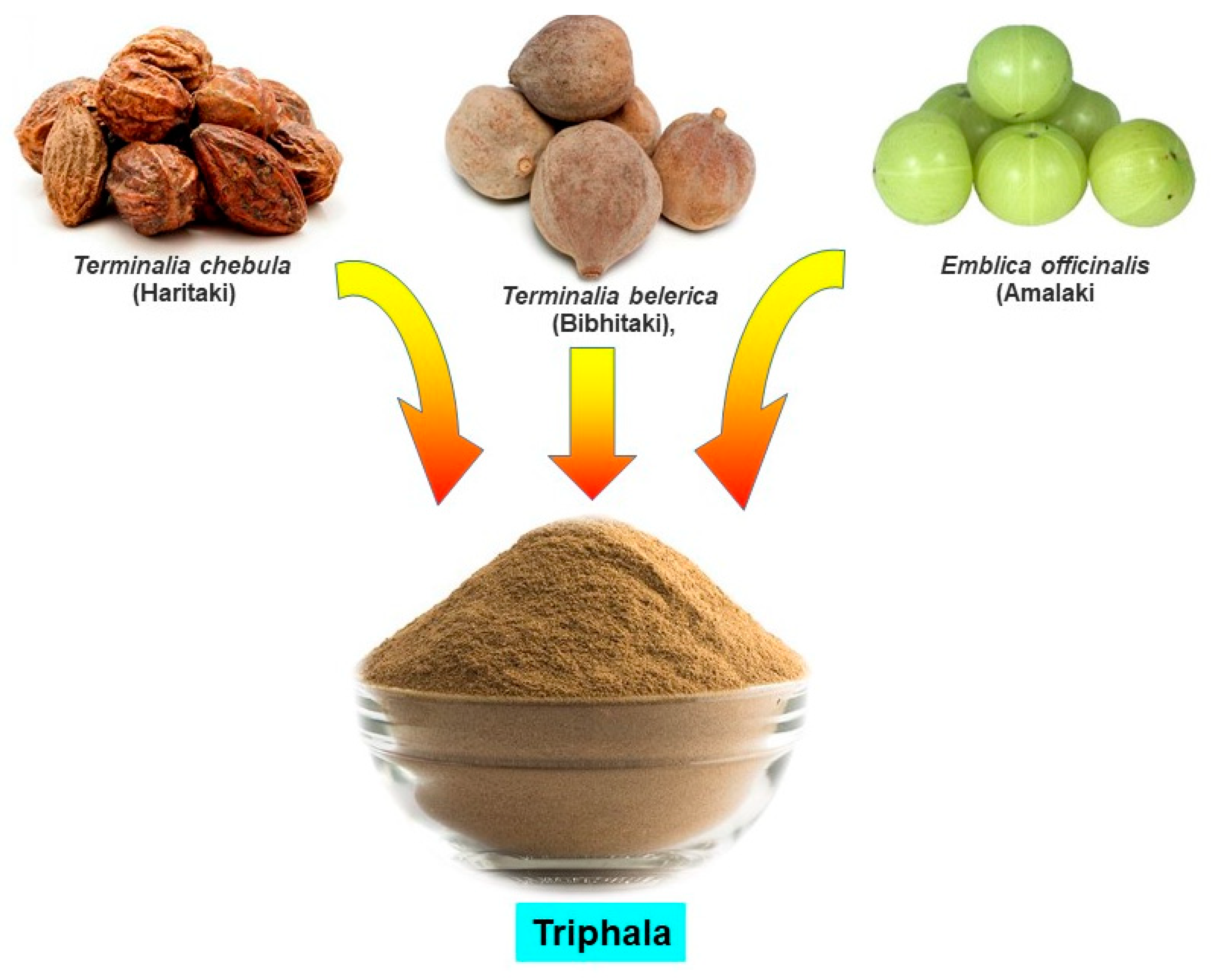 Antioxidants Free Full Text Oxidative Stress And Cancer Chemopreventive And Therapeutic Role Of Triphala Html