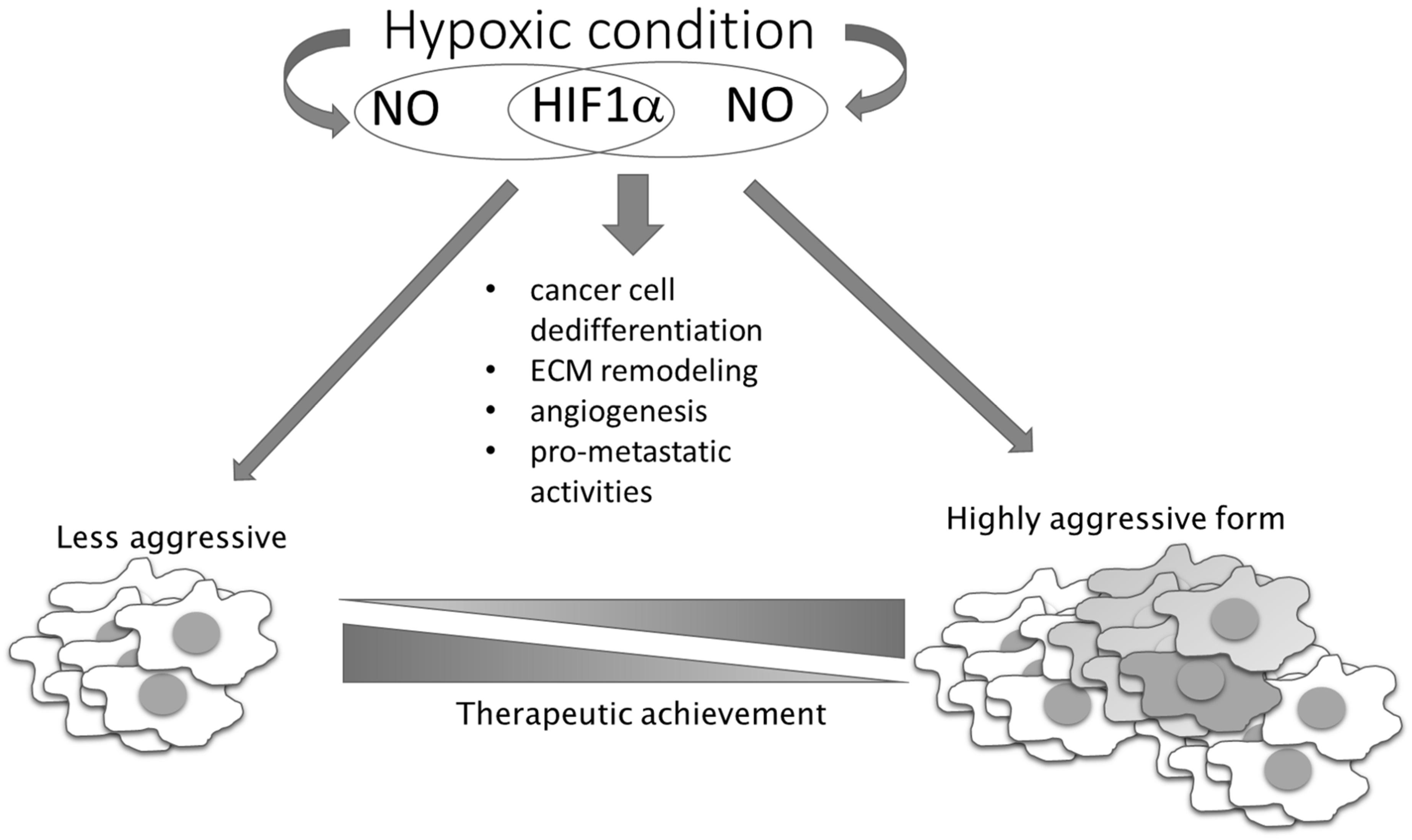 Aggressive cancer phenotypes. Parteneri: