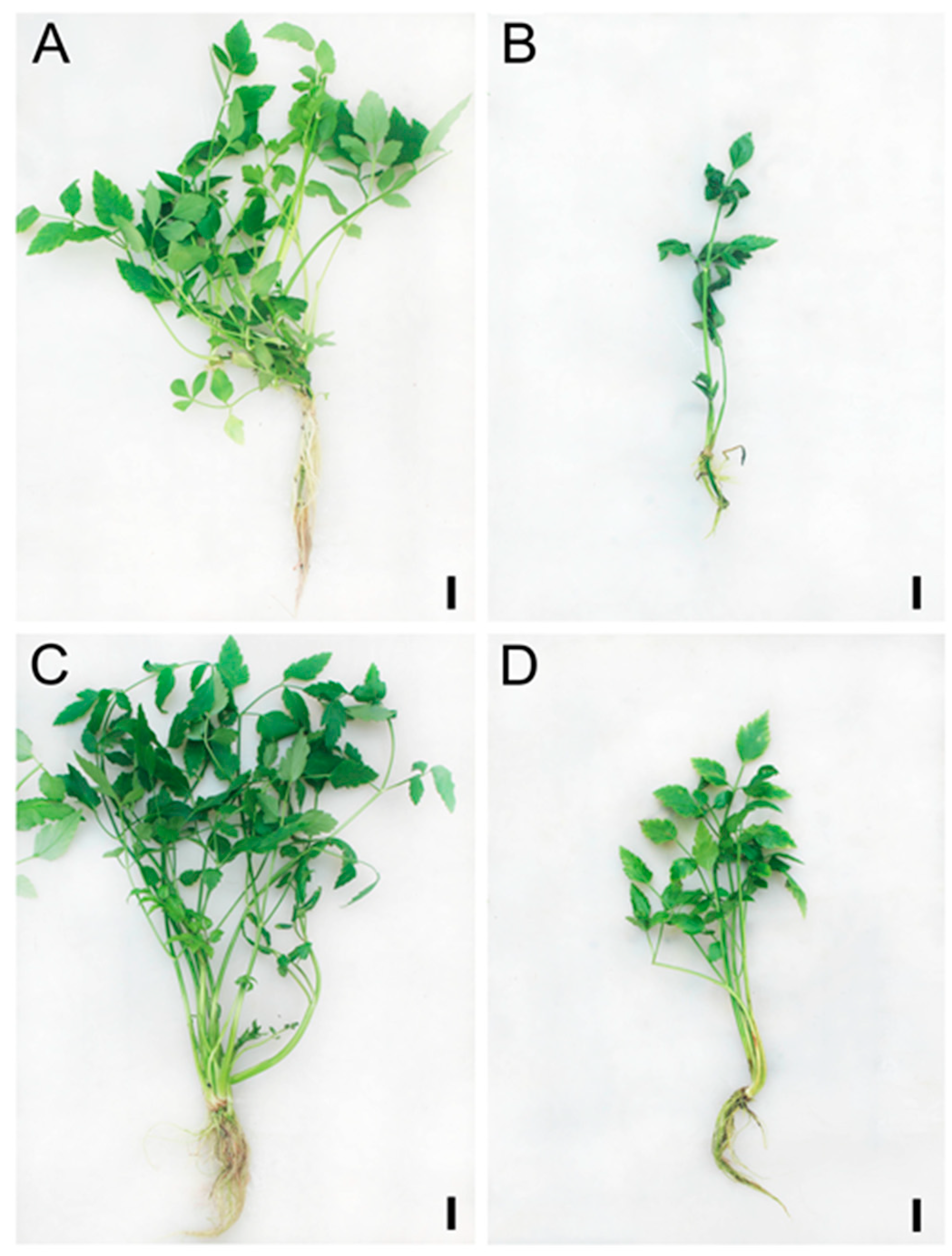Antioxidants Free Full Text Investigation Of An Antioxidative System For Salinity Tolerance In Oenanthe Javanica Html