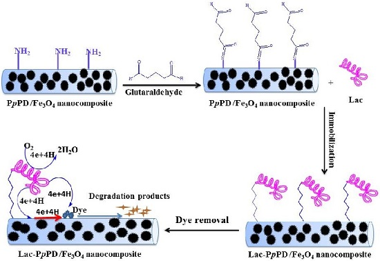 immobilization of amylase on magnetic nanoparticles essay Furthermore, the immobilization efficiency reached 90%, and the maximum activity recovery of î±-amylase and glucoamylase was 87 and 85%, respectively more importantly, the bienzyme magnetic nanobiocatalyst with fe3+ -ta film could be simply recovered by a magnet.