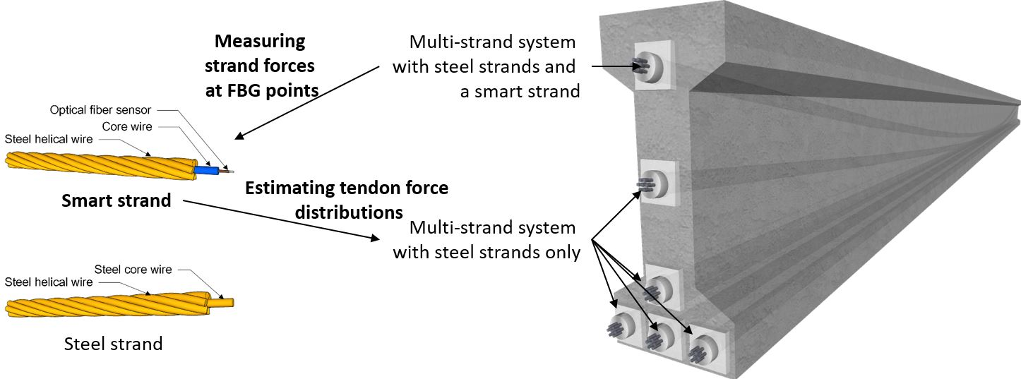 Applied Sciences | Free Full-Text | Estimation of Tendon ...