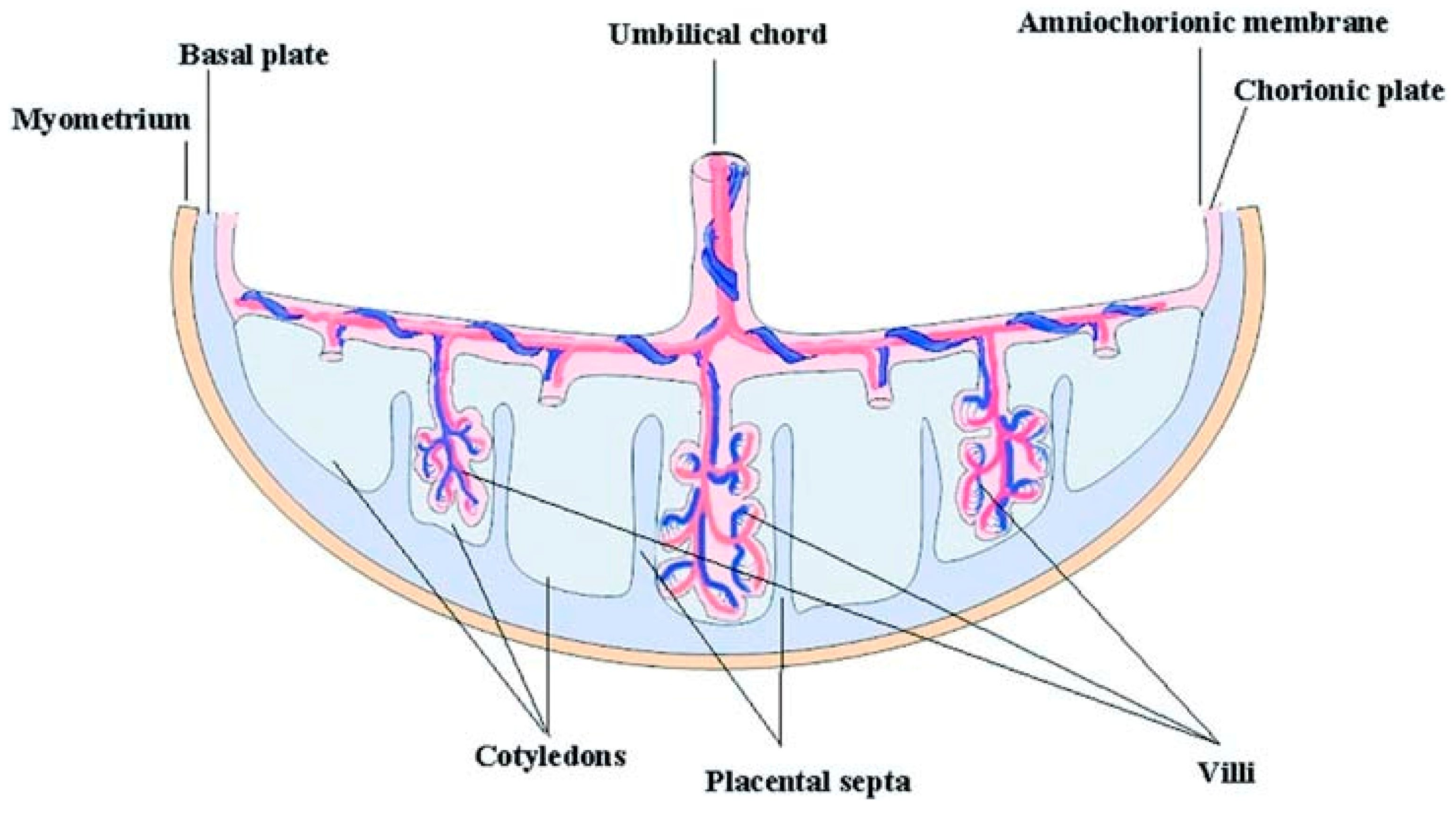 Applied Sciences | Free Full-Text | Bone Tissue Engineering Using