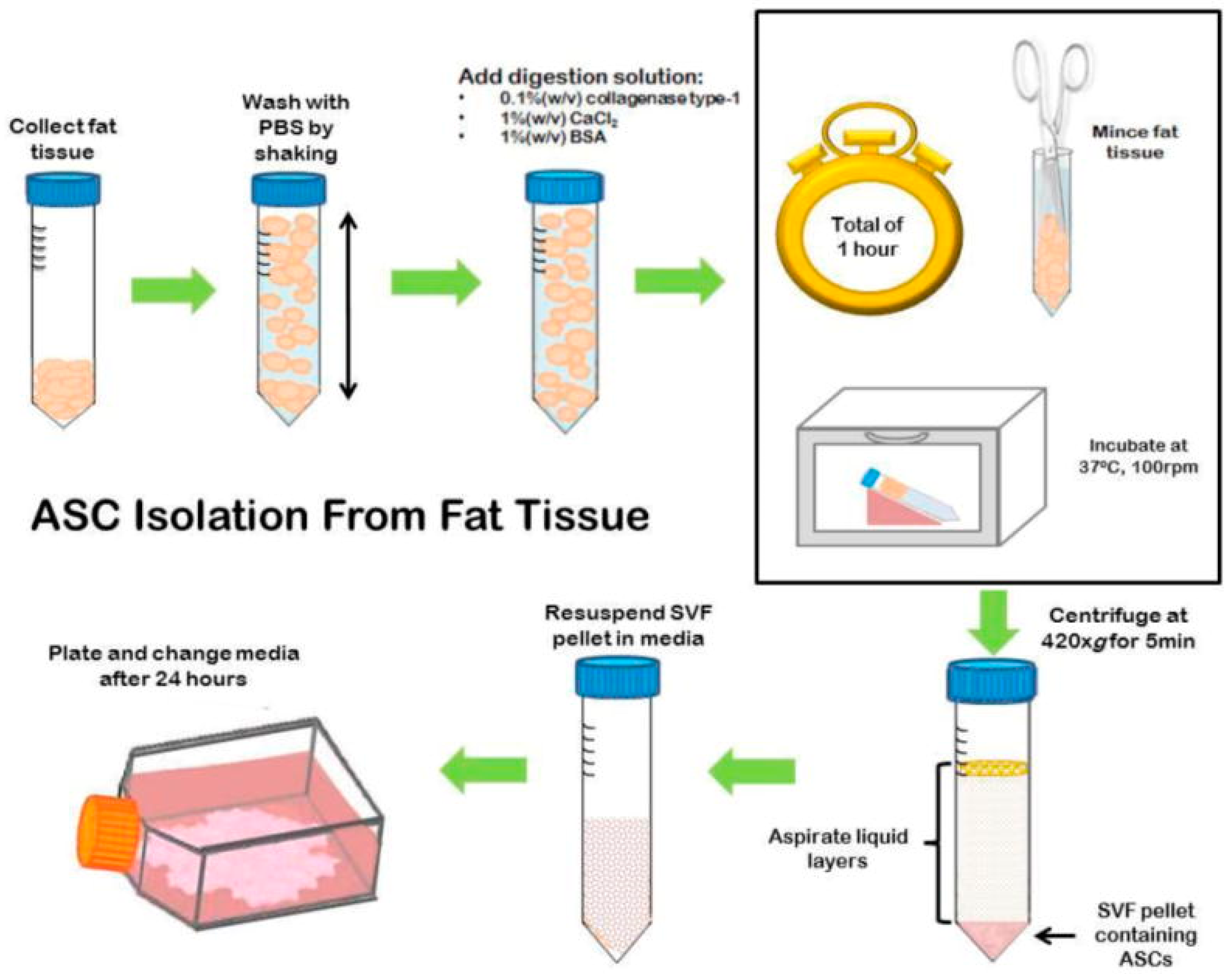 Applied Sciences Free Full Text Bone Tissue Engineering Using