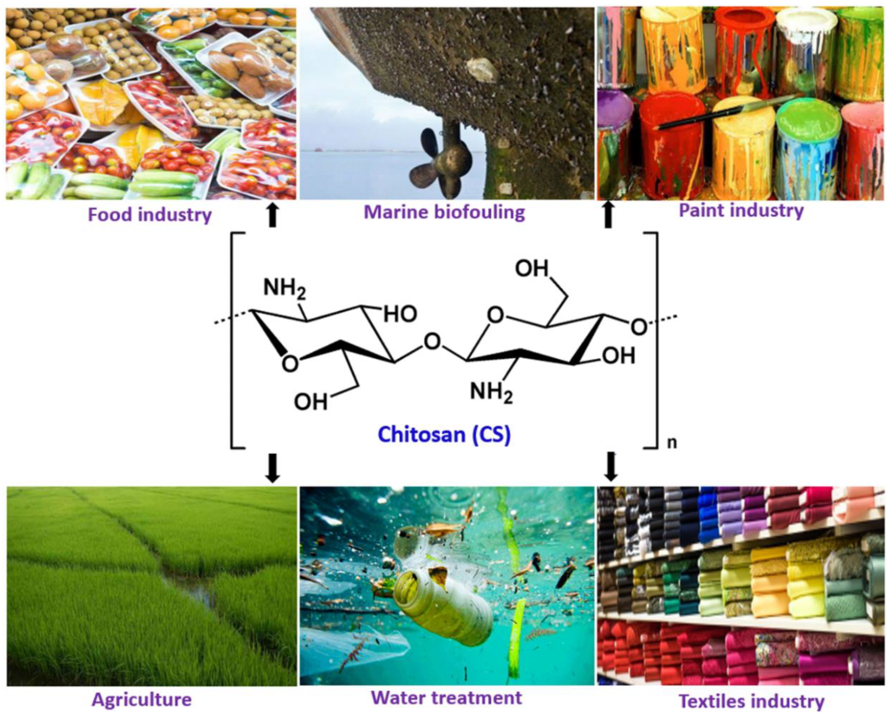 Applied Sciences | Free Full-Text | Chitosan Nanocomposite Coatings