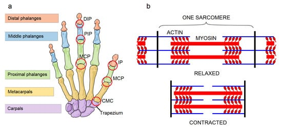 hunter 27183 wiring diagram applied sciences free full text artificial hand technology  artificial hand technology