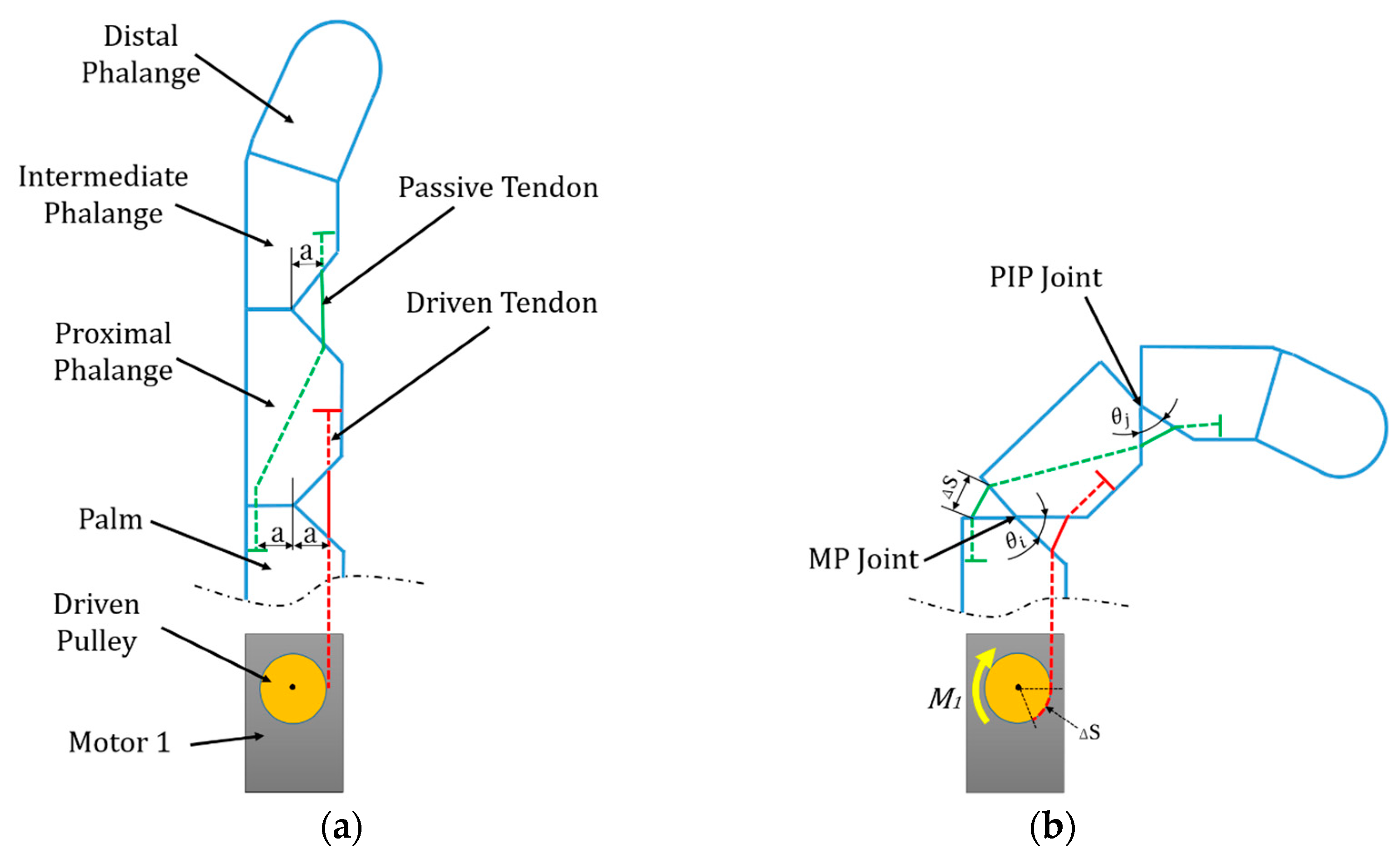 Applied Sciences | Free Full-Text | Anthropomorphic Prosthetic Hand with  Combination of Light Weight and Diversiform Motions | HTML