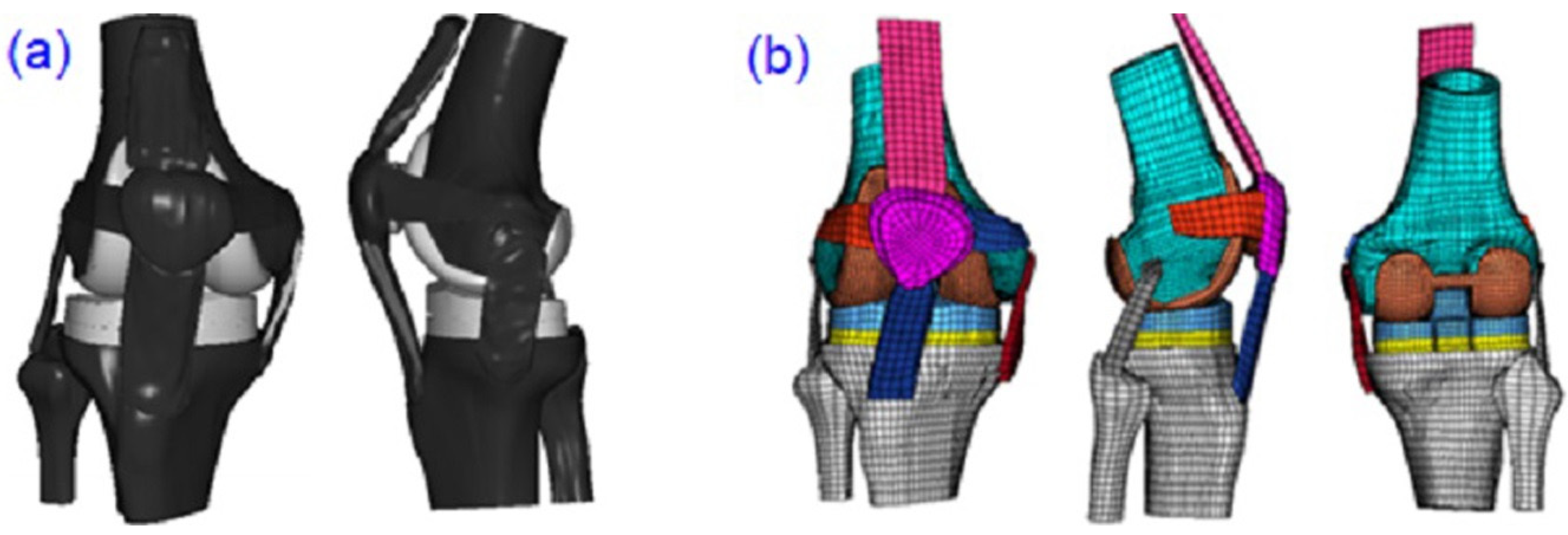 Applied Sciences | Free Full-Text | The Effect of Patellar