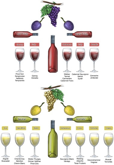 Vol 2 The chemistry of wine, stabilization and treatments