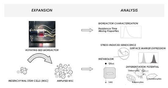 Characterization and Application of a Disposable Rotating Bed Bioreactor for Mesenchymal Stem Cell Expansion
