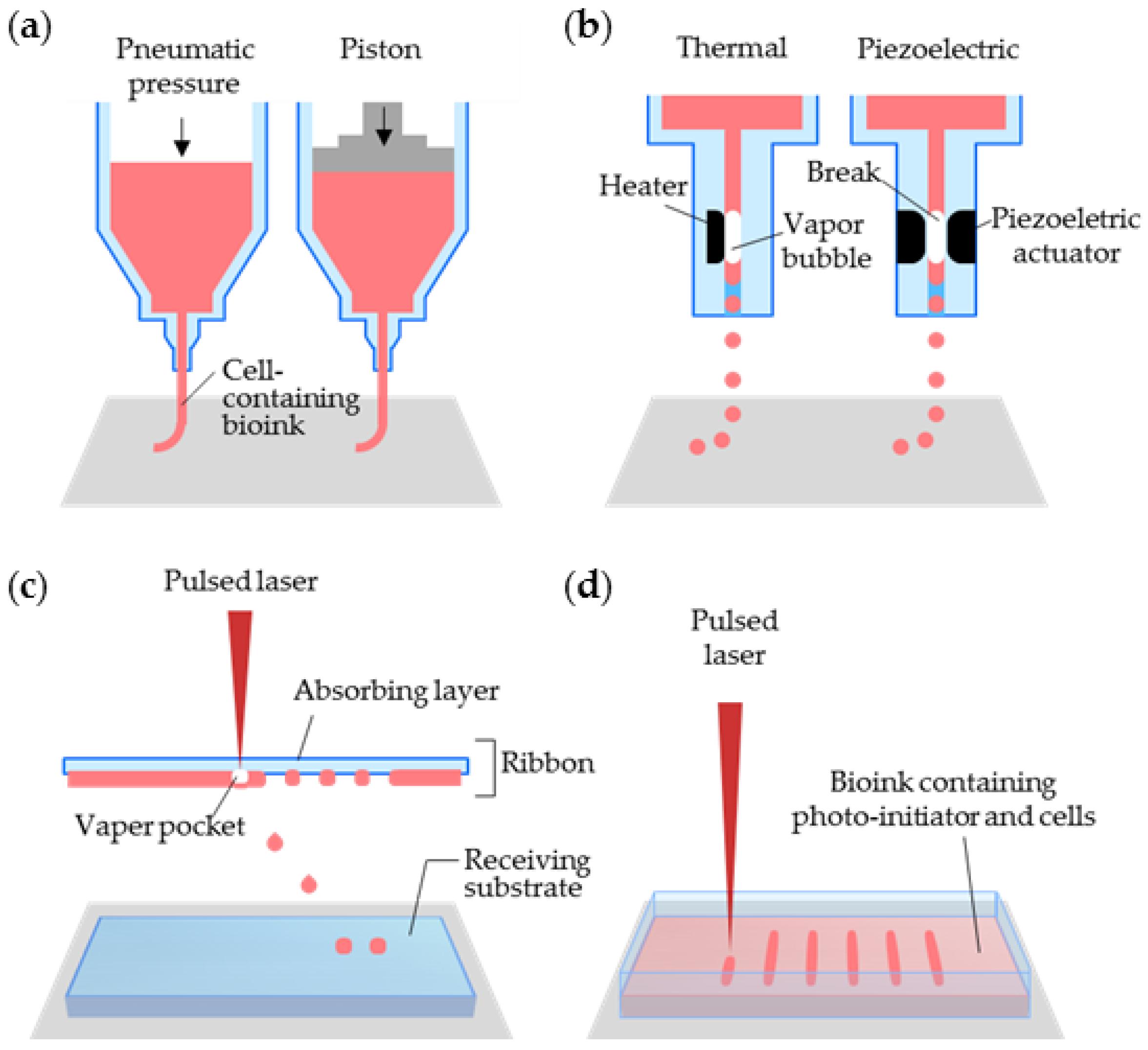 3D Printing Of Organs-On