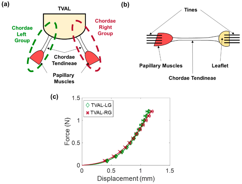 Bioengineering | Free Full-Text | Mechanics of the Tricuspid