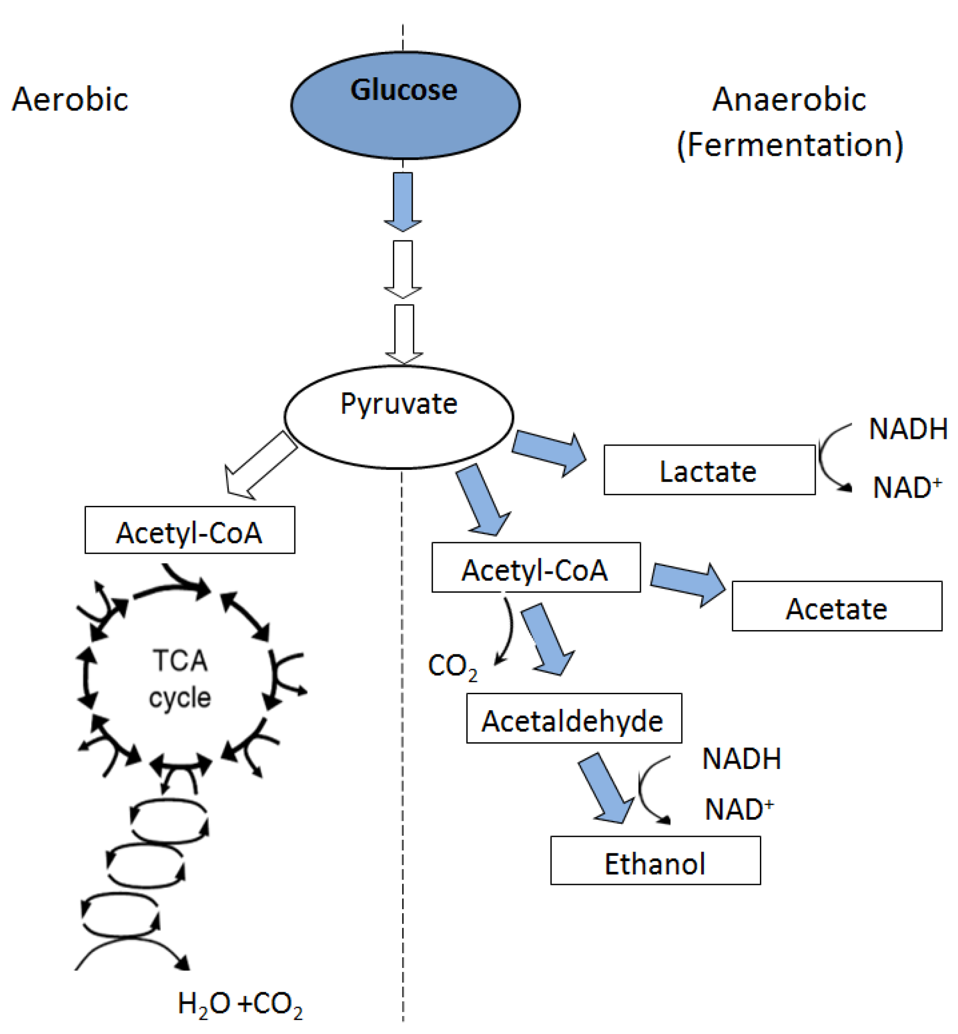 Anaerobic Metabolism: Soil Oxidation-Reduction In