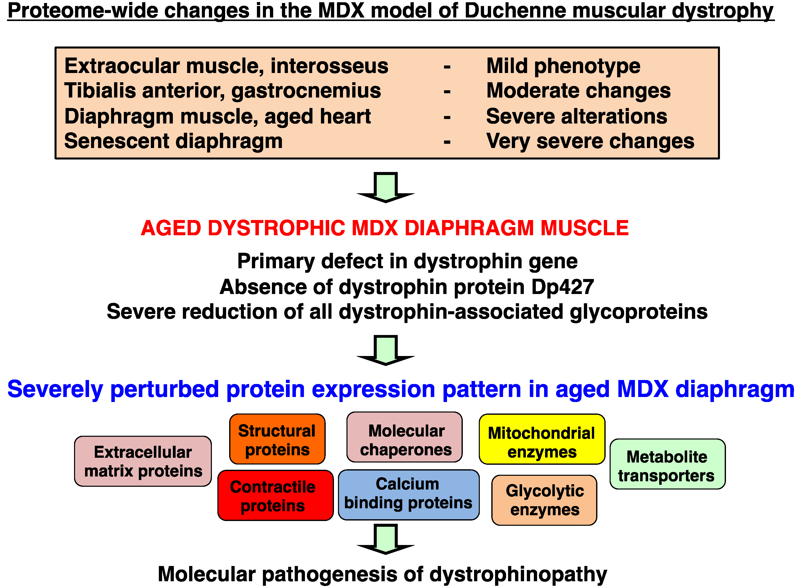 Duchenne muscular dystrophy research paper