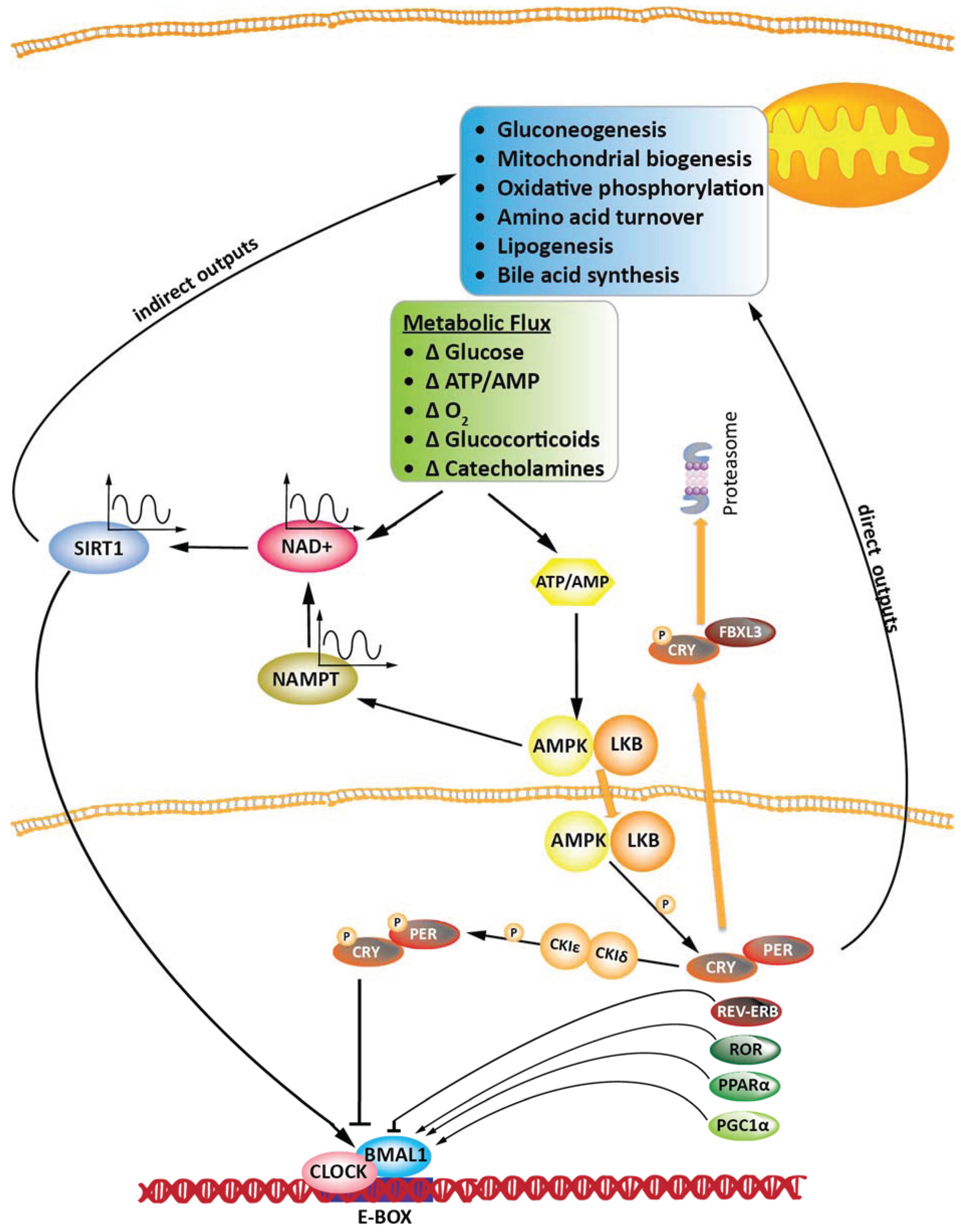 molecular nutrition anabolics 10th edition pdf