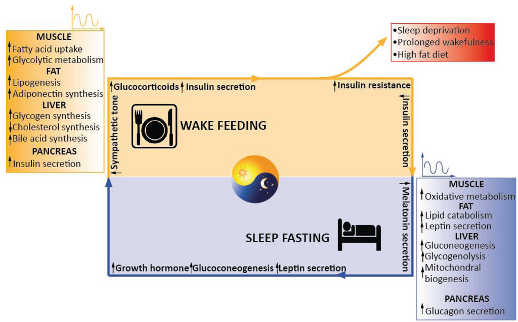 consequences of disrupting biological rhythms essay Disrupting biological rhythms essay help  disrupting biological rhythms essay  before we look at the consequences of disrupting biological rhythms we must.