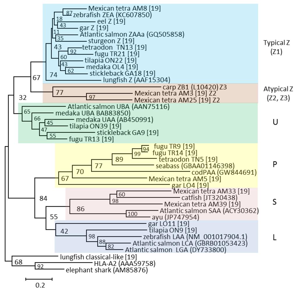 journal of fish biology pdf
