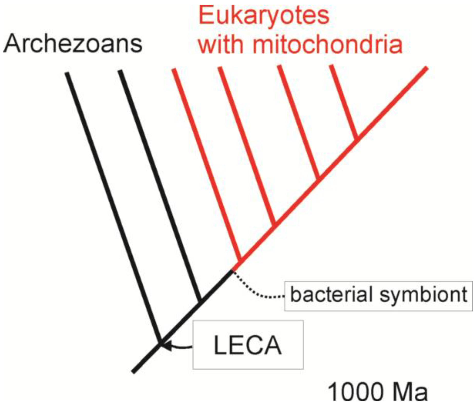 origin of eukaryotes bio 108 The hypotheses for the origin of eukaryotes are briefly summarized matej vesteg comenius university, institute of cell biology & juraj kraj ovi 108 citations.