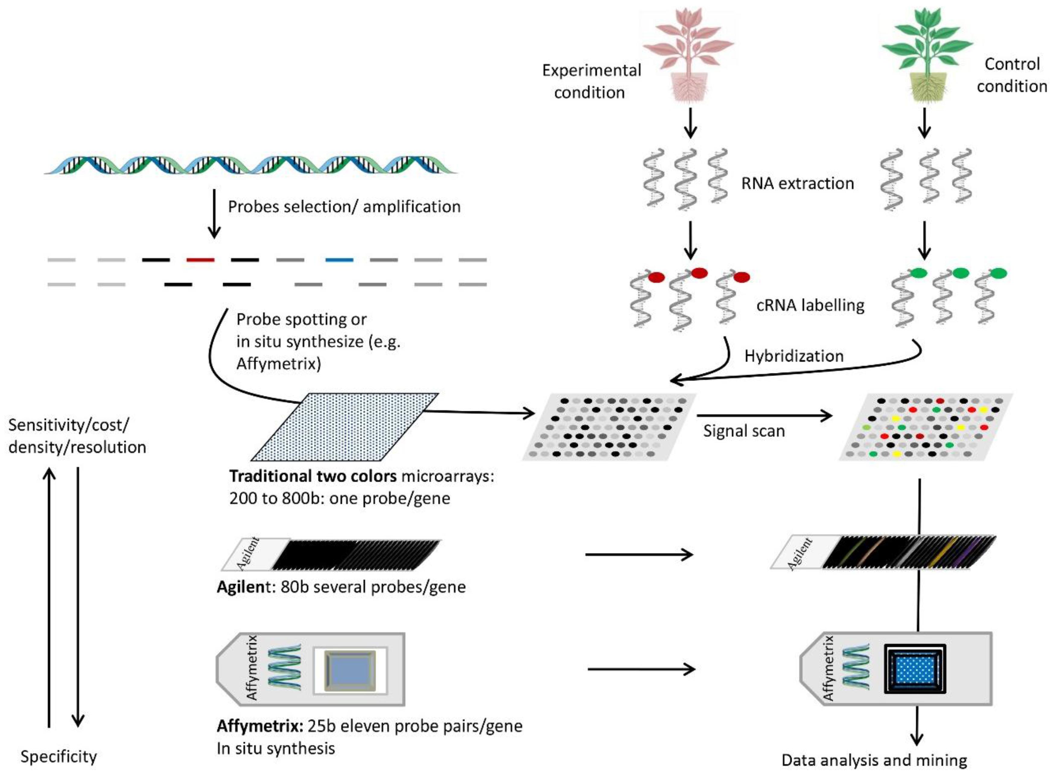 gene expression bio lab