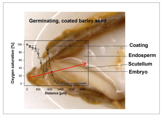 Seed Coating Increases Seed Moisture Uptake and Restricts Embryonic Oxygen Availability in Germinating Cereal Seeds